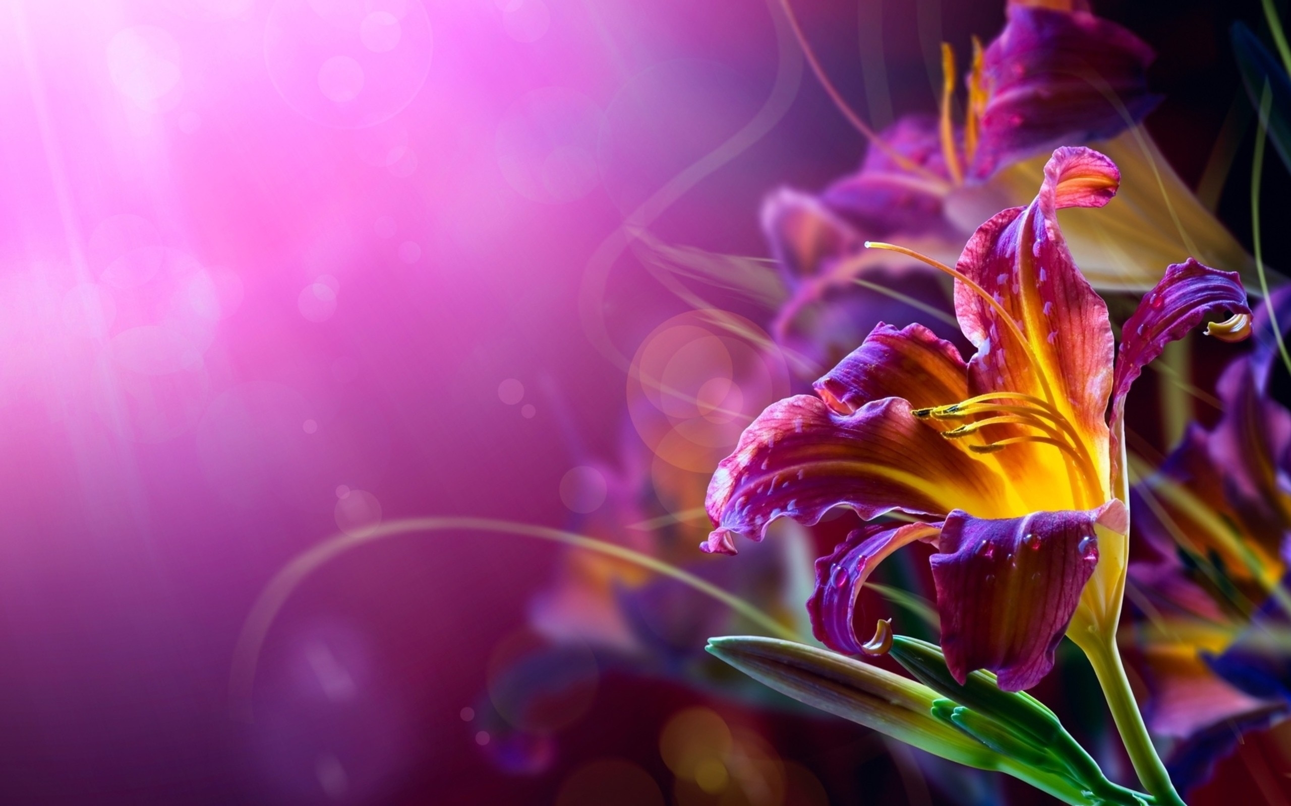 abstract flower high definition wallpapers
