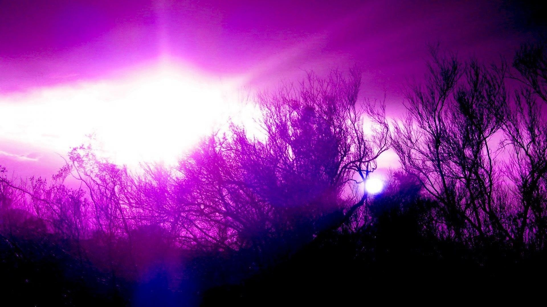purple abstract photo