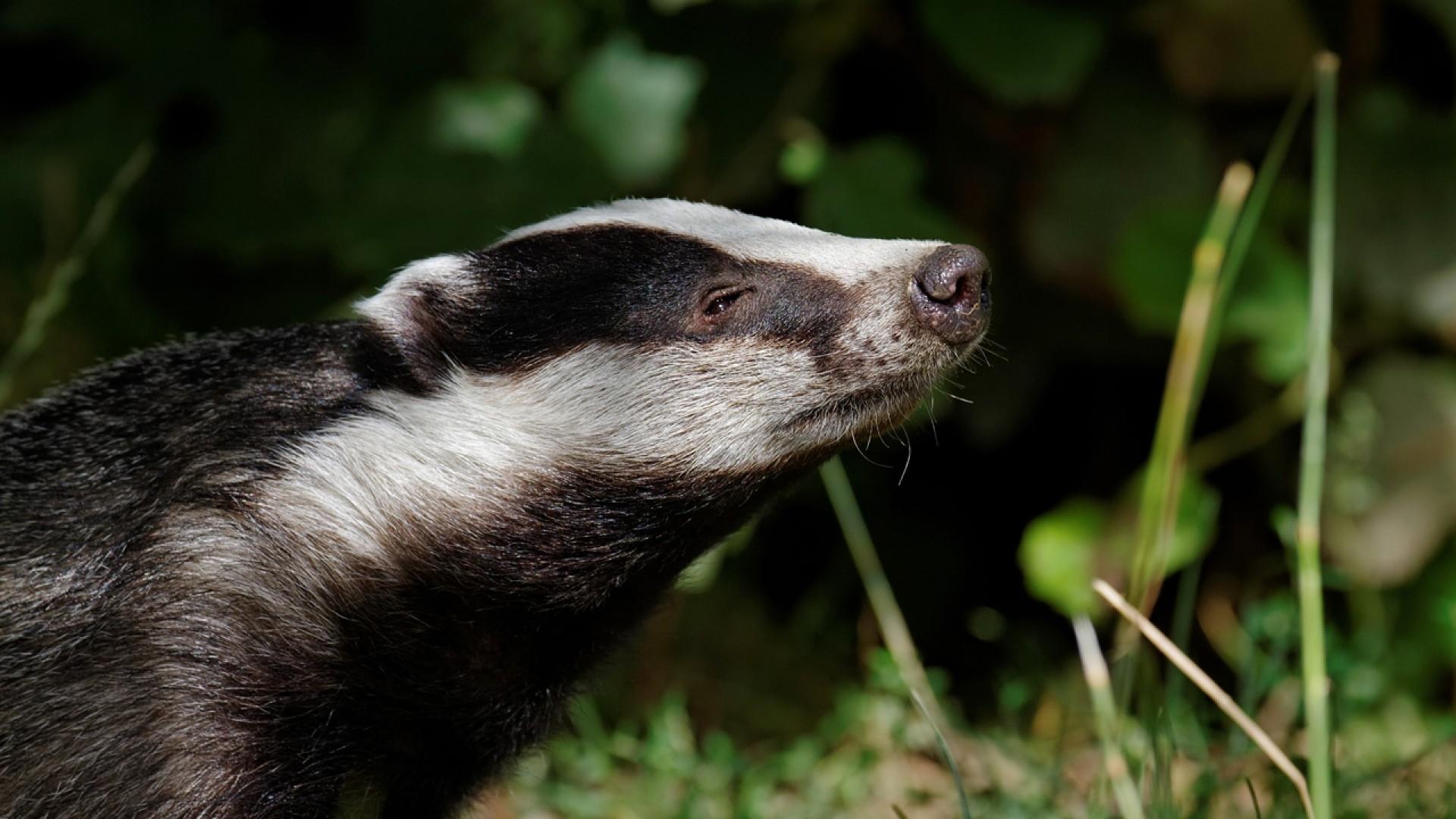 badger 1080