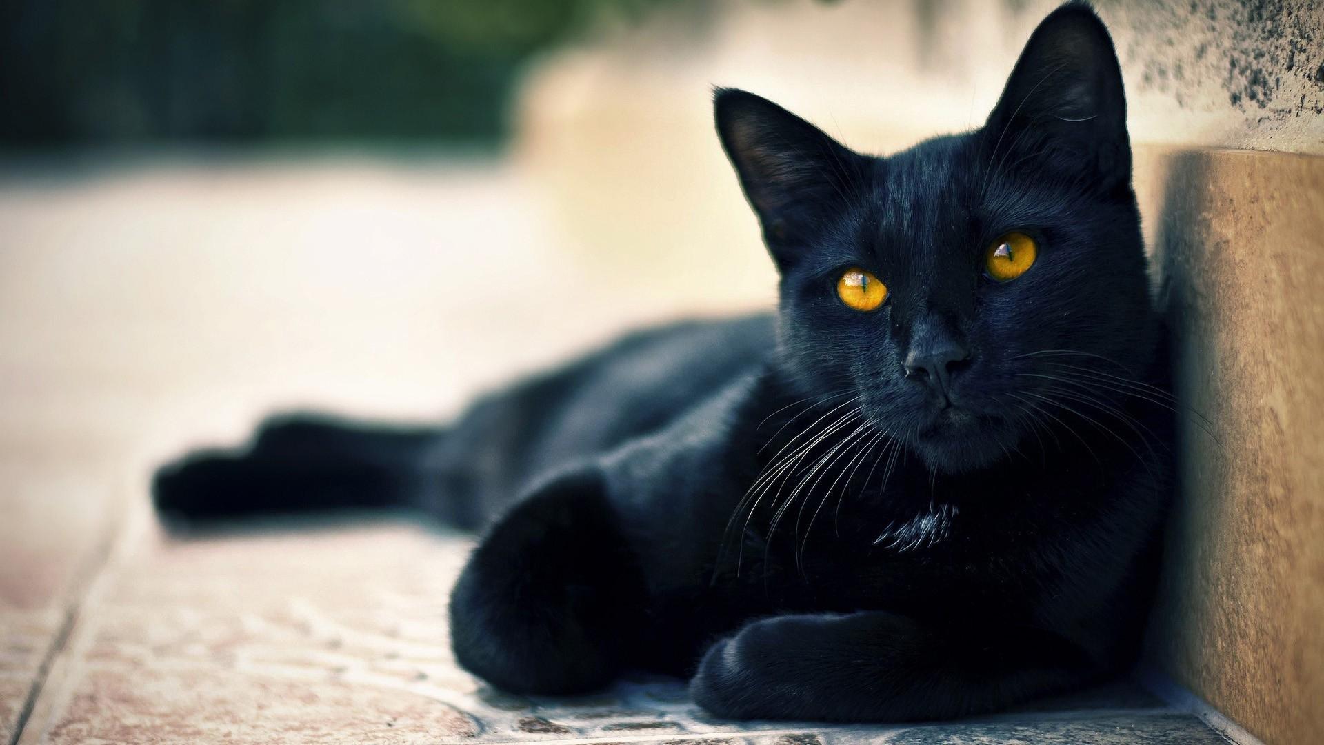 cat 1080
