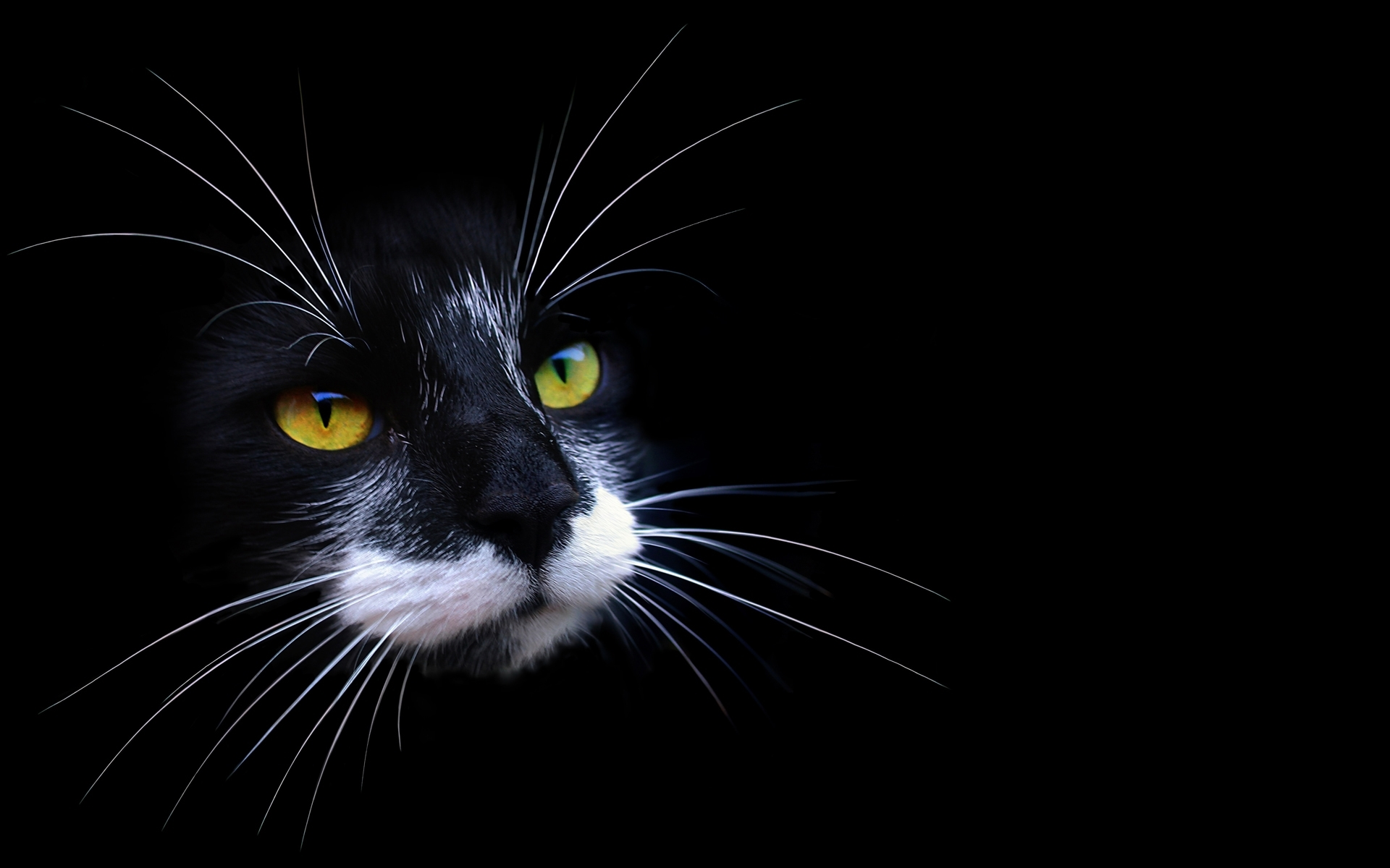 Cat desktop wallpaper - Cool backgrounds of cats ...