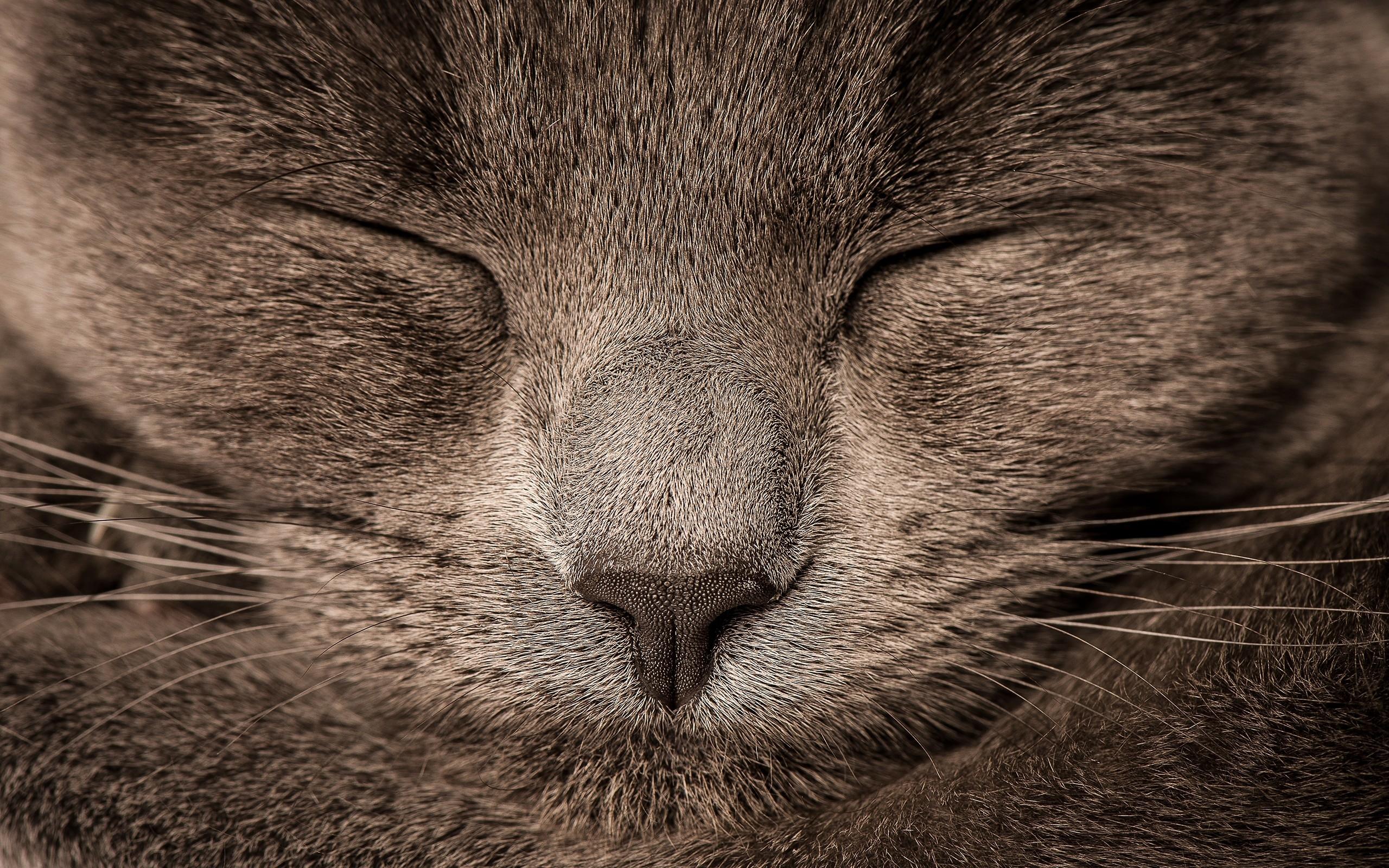 cat free download