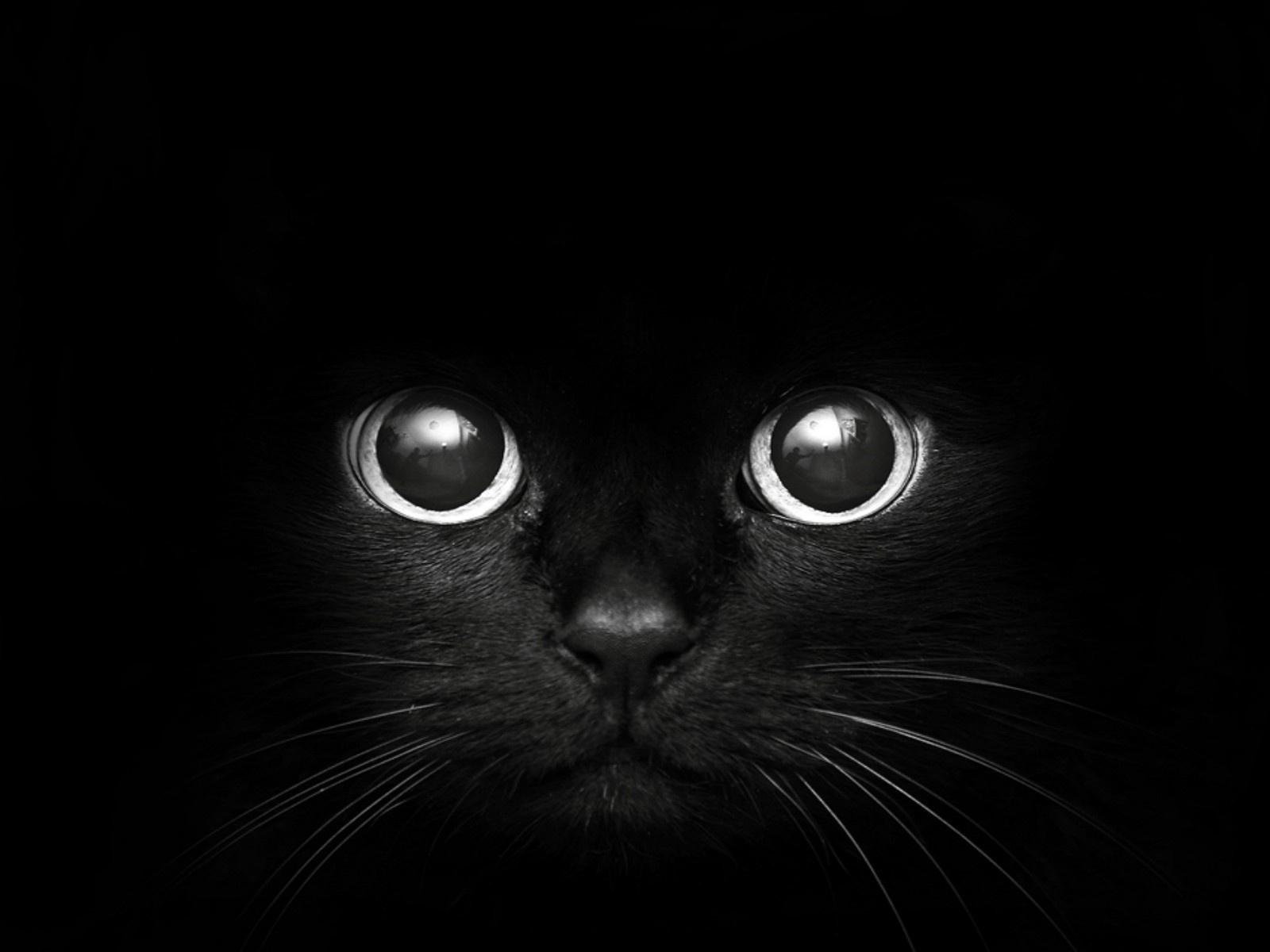 cat hd pics