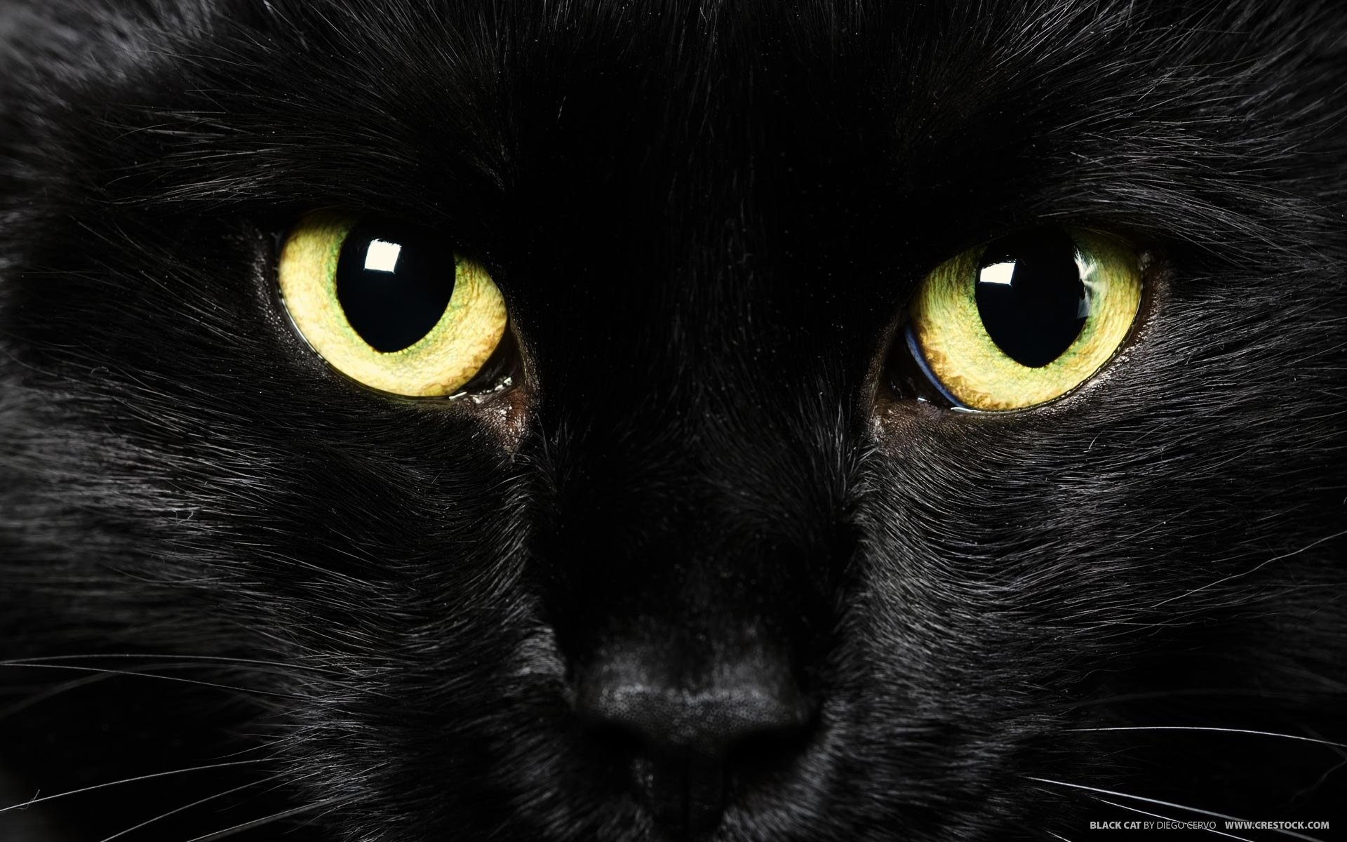 cat new wallpapers