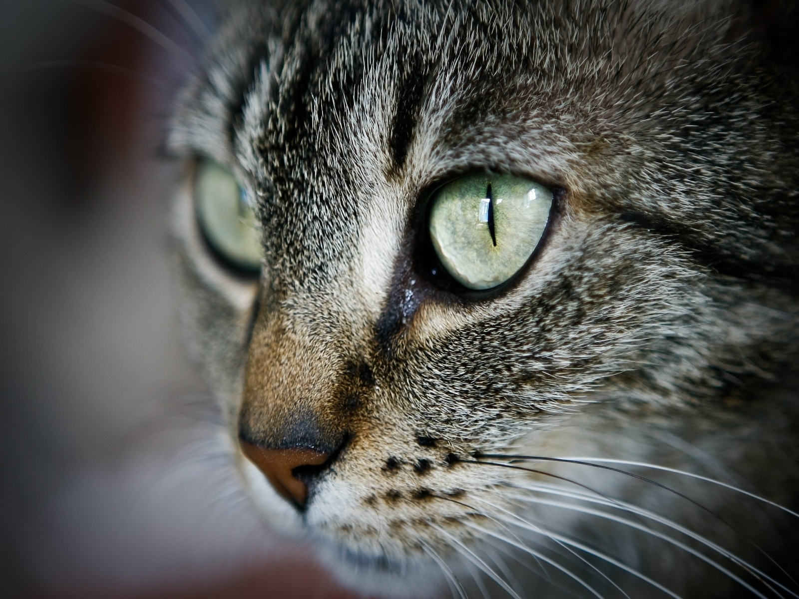 cat pc wallpapers