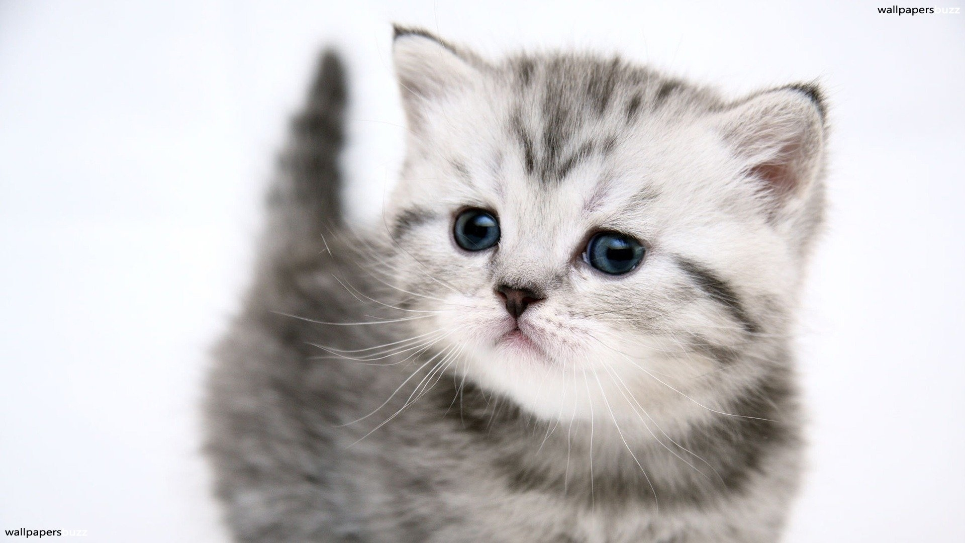 cat wallpapers for iphone