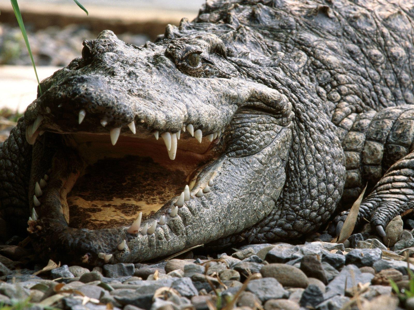 crocodile 1080p full