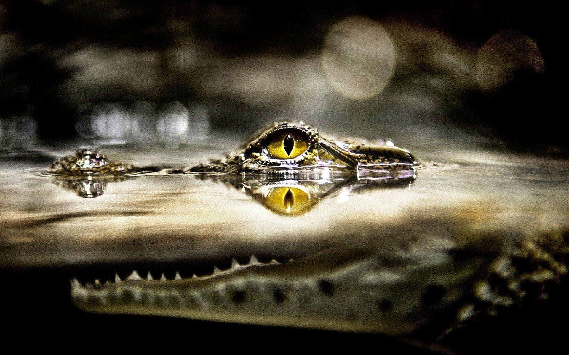 crocodile new wallpapers