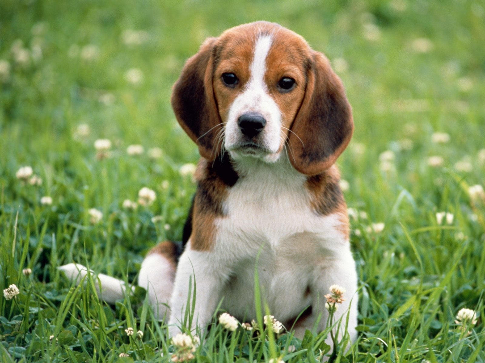 dog free wallpapers
