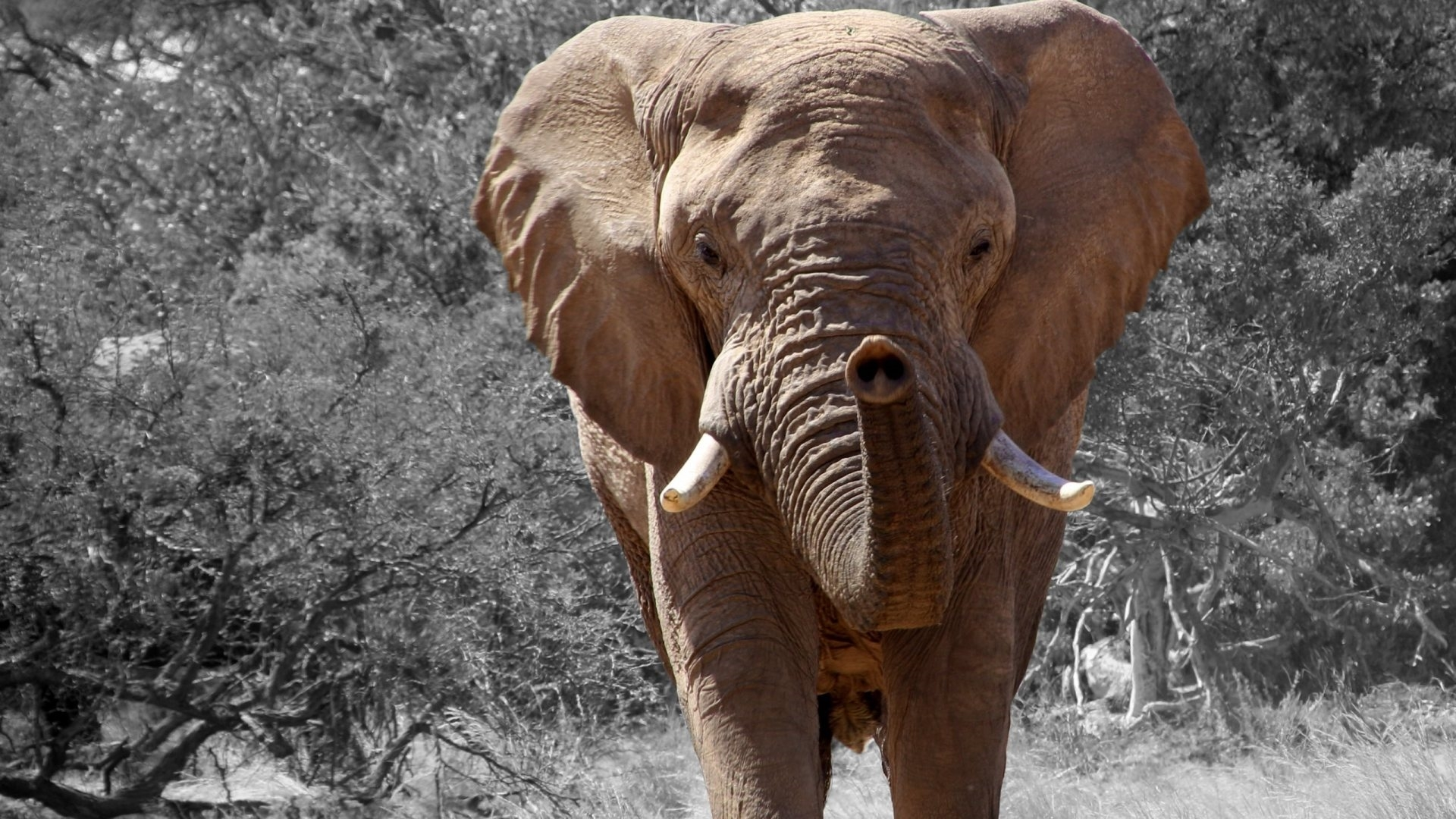elephant hd deskto