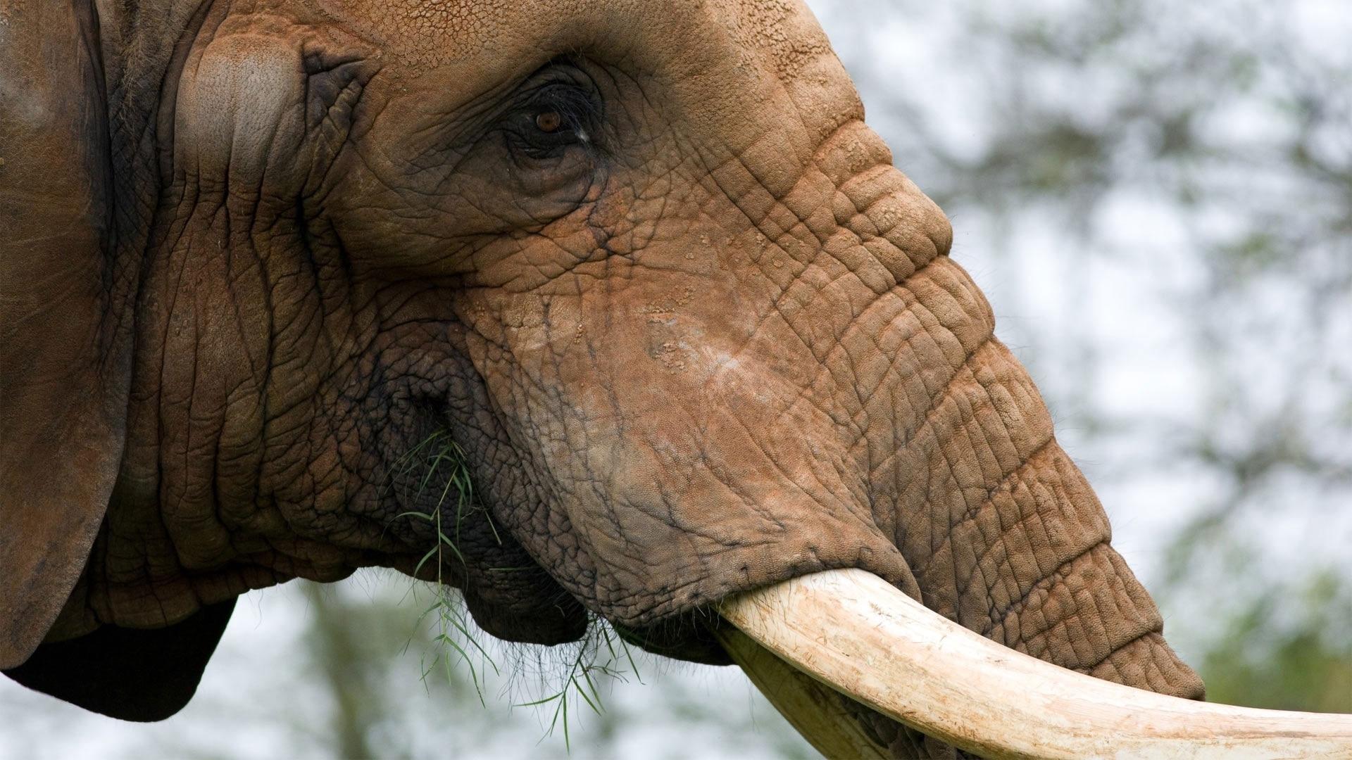 elephant hd pics