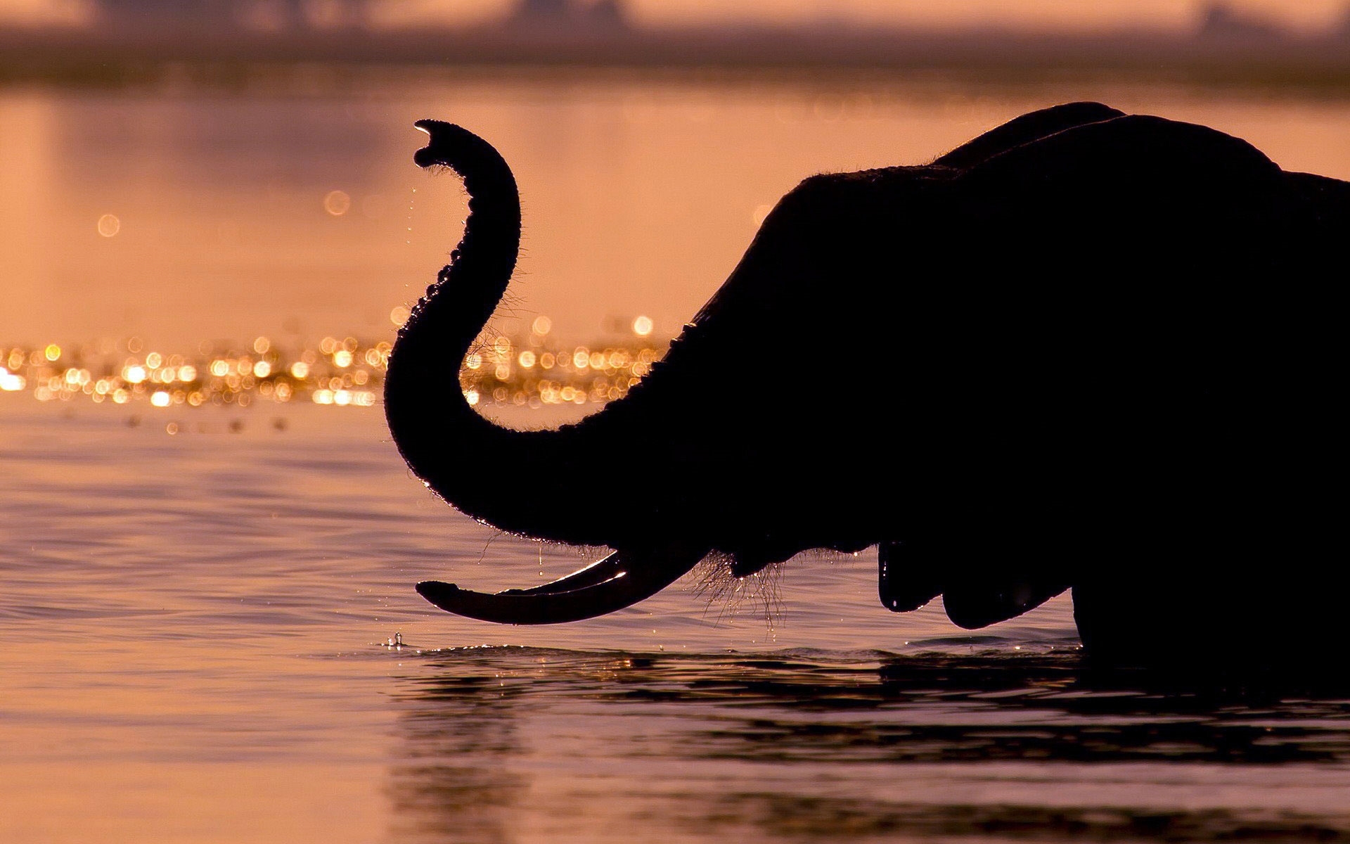 elephant hd wallpaper