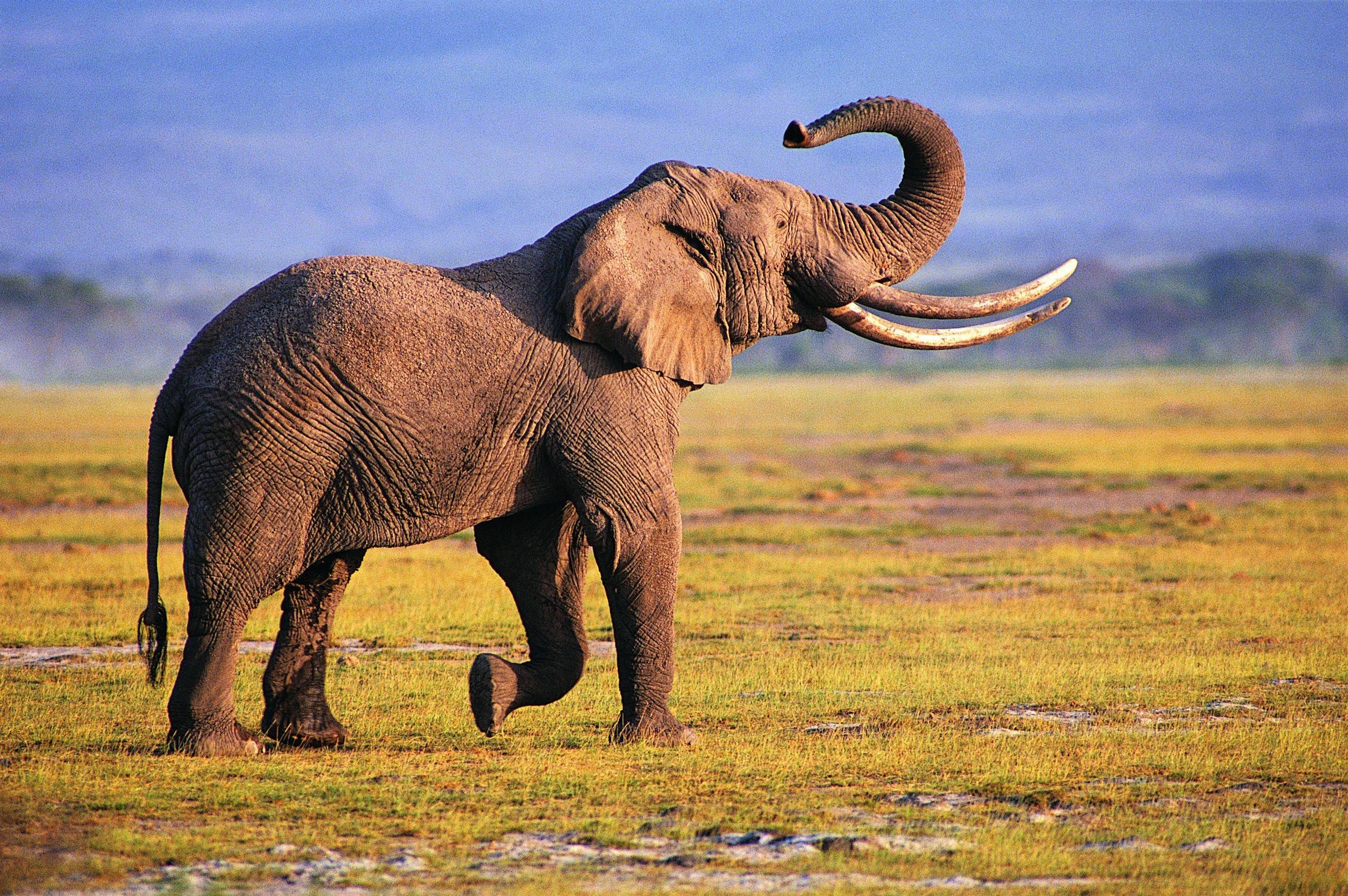 elephant new photos