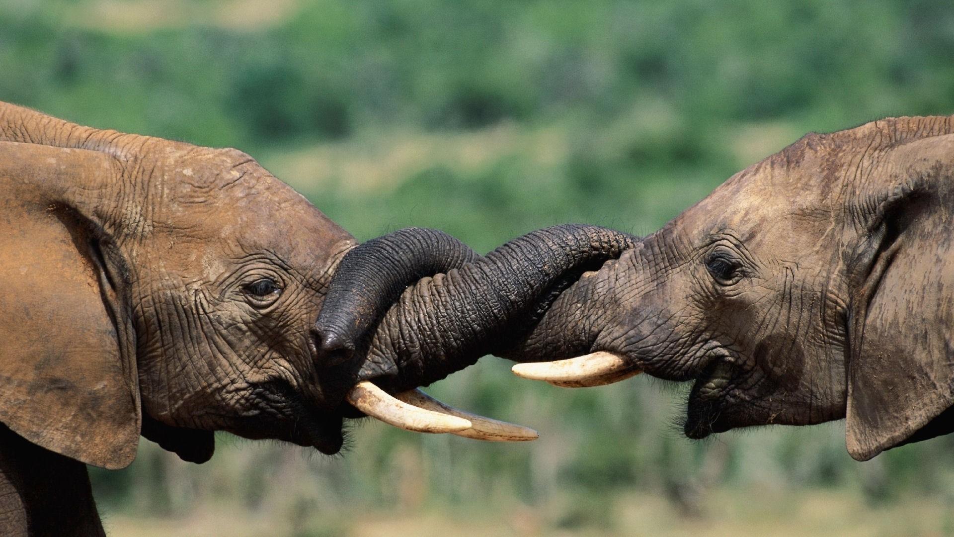 elephant wallpapers hd