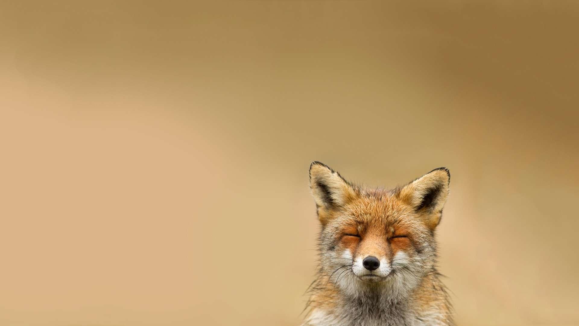 fox deskto