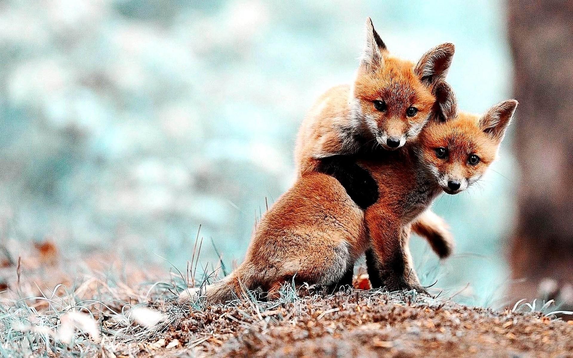 fox hd deskto