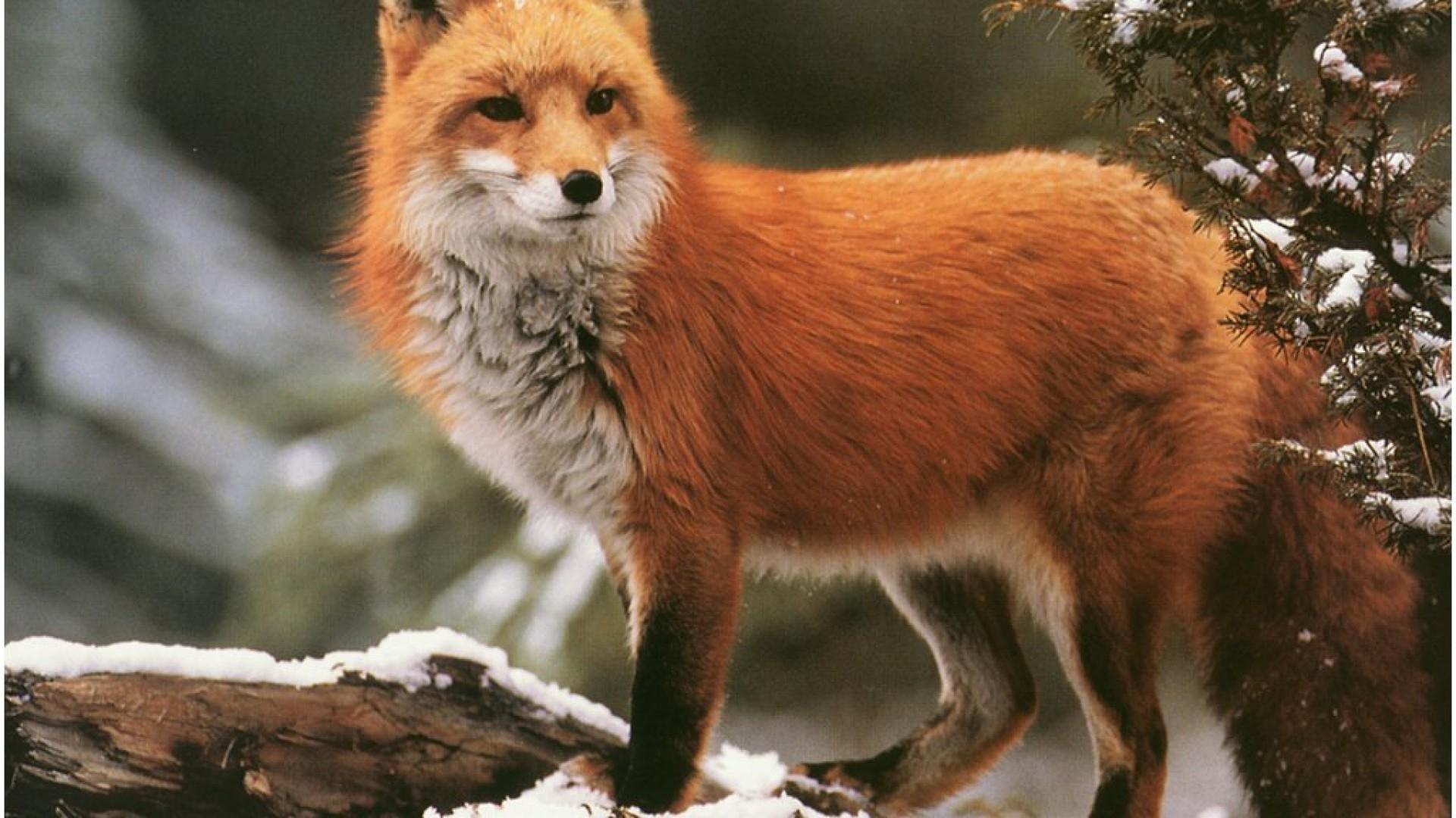 fox hd photos