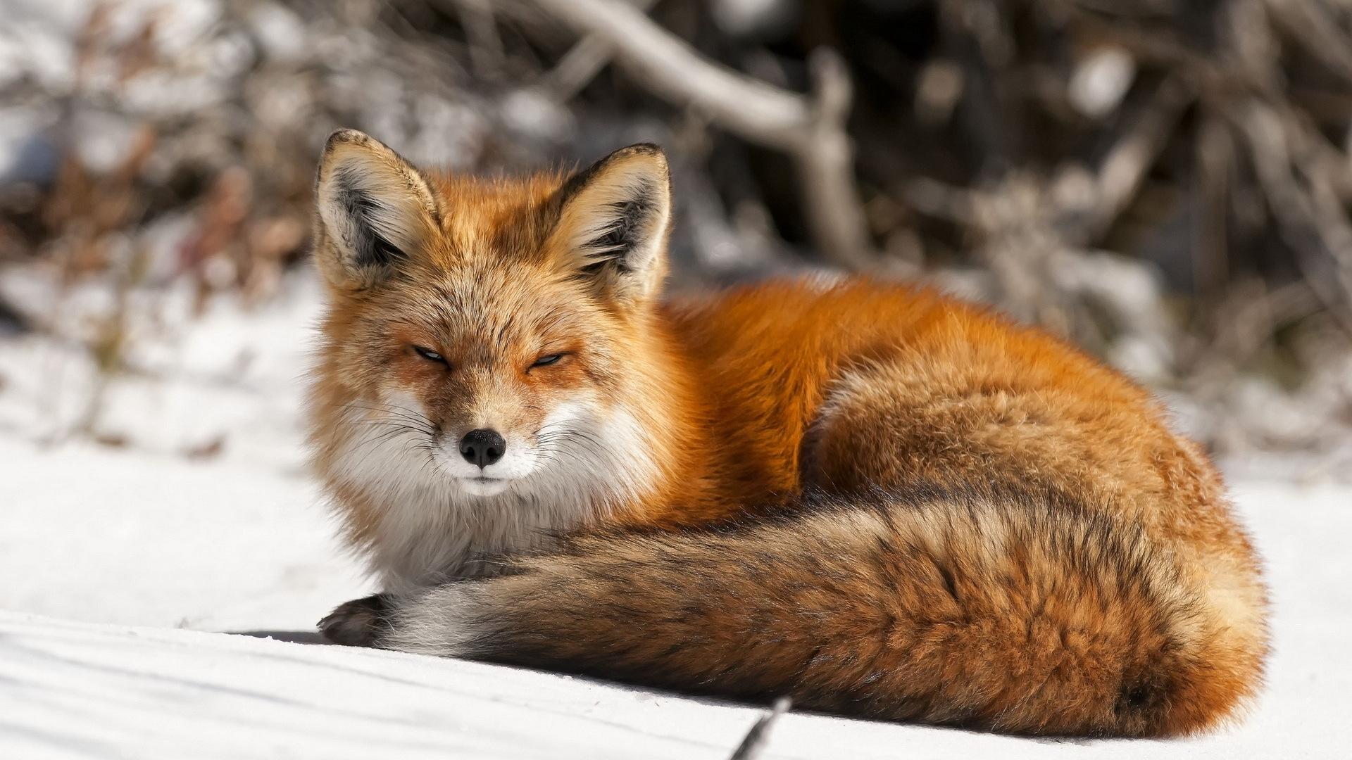 fox new photos