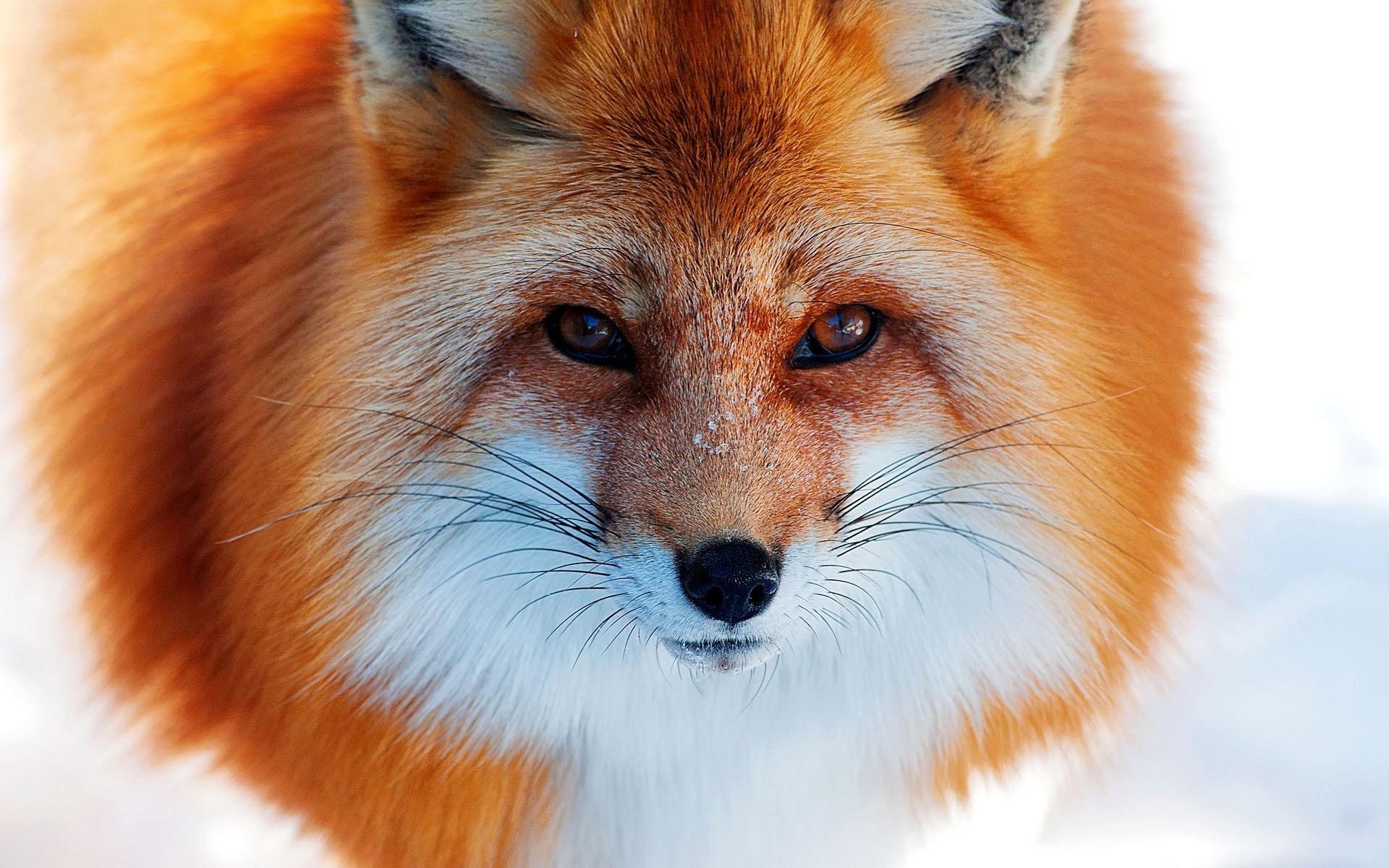 fox widescreen
