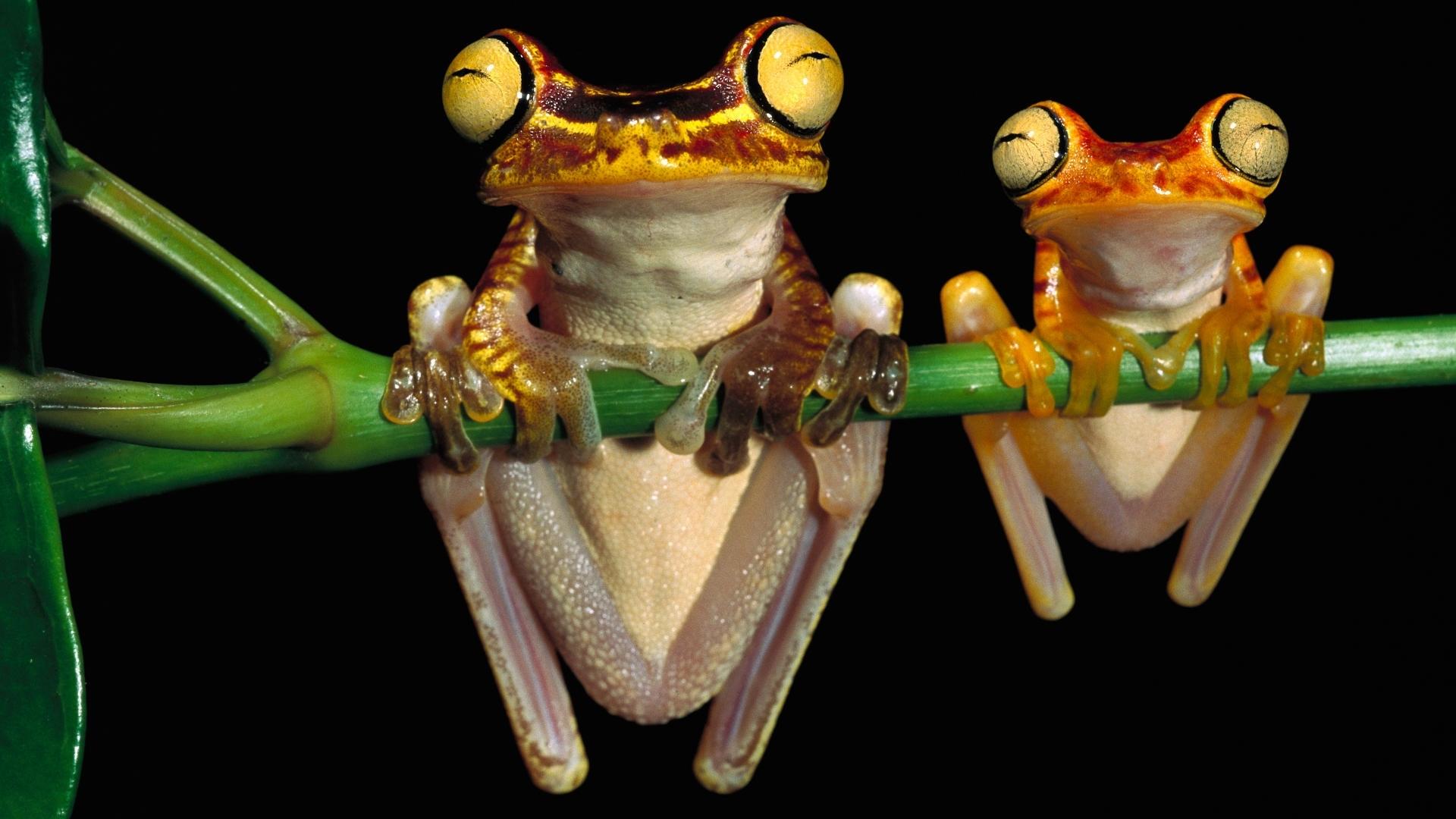 frog free