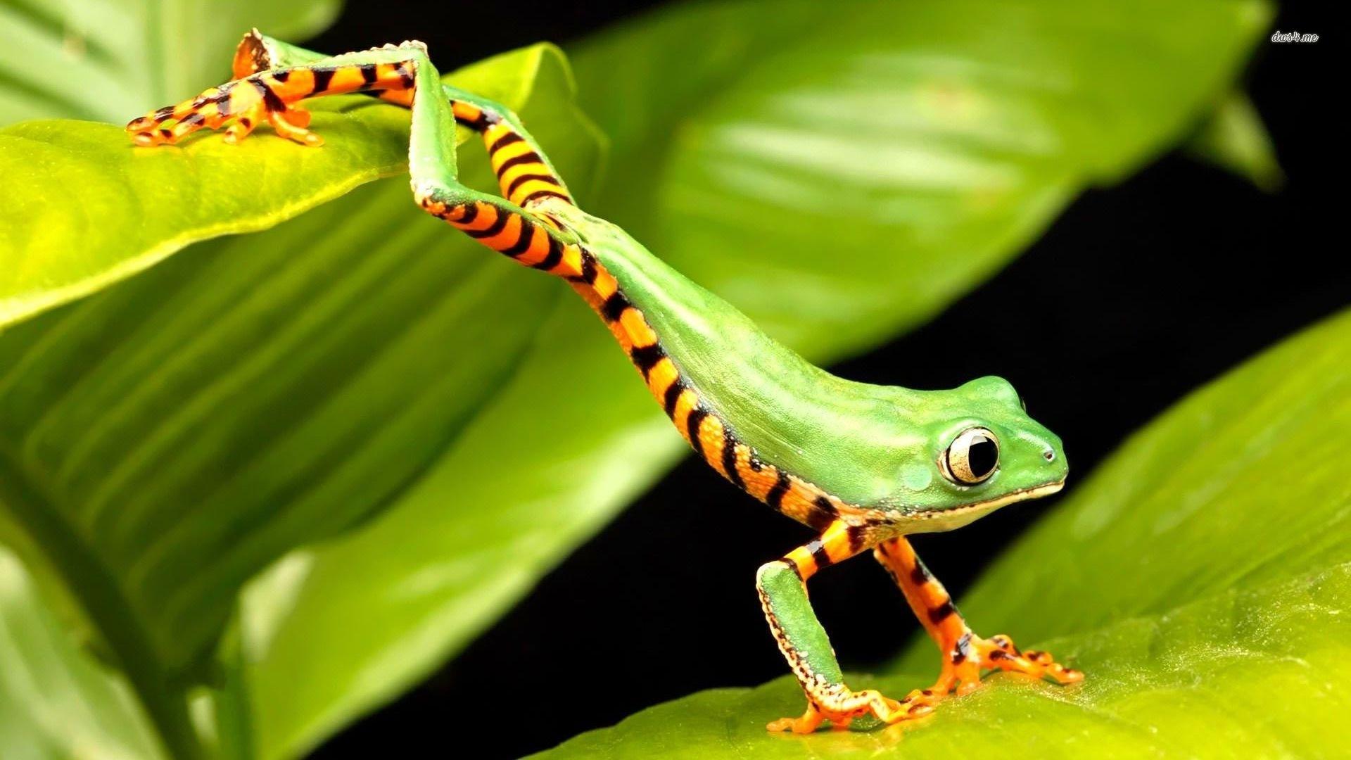 frog hd pics
