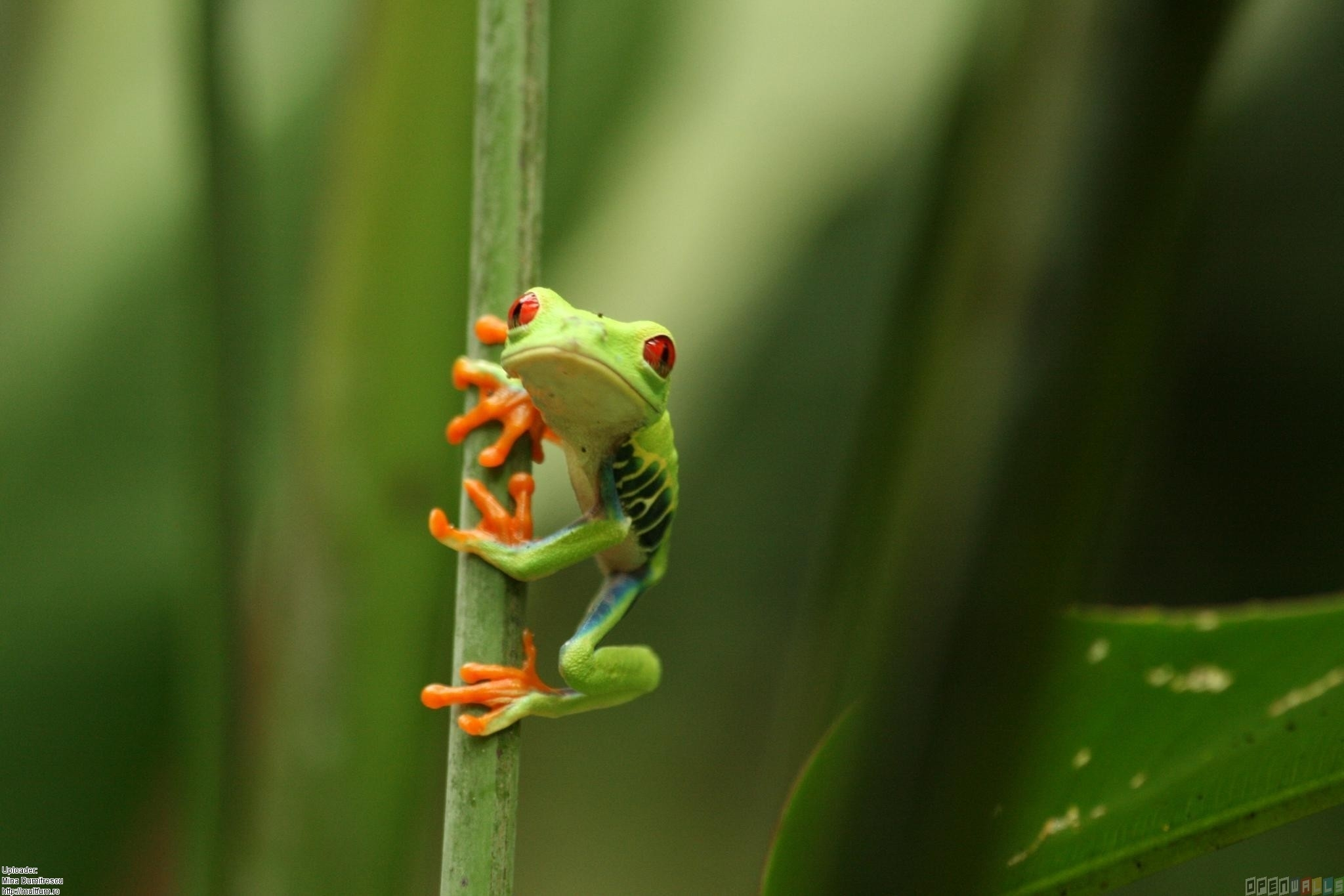 frog hd wallpaper