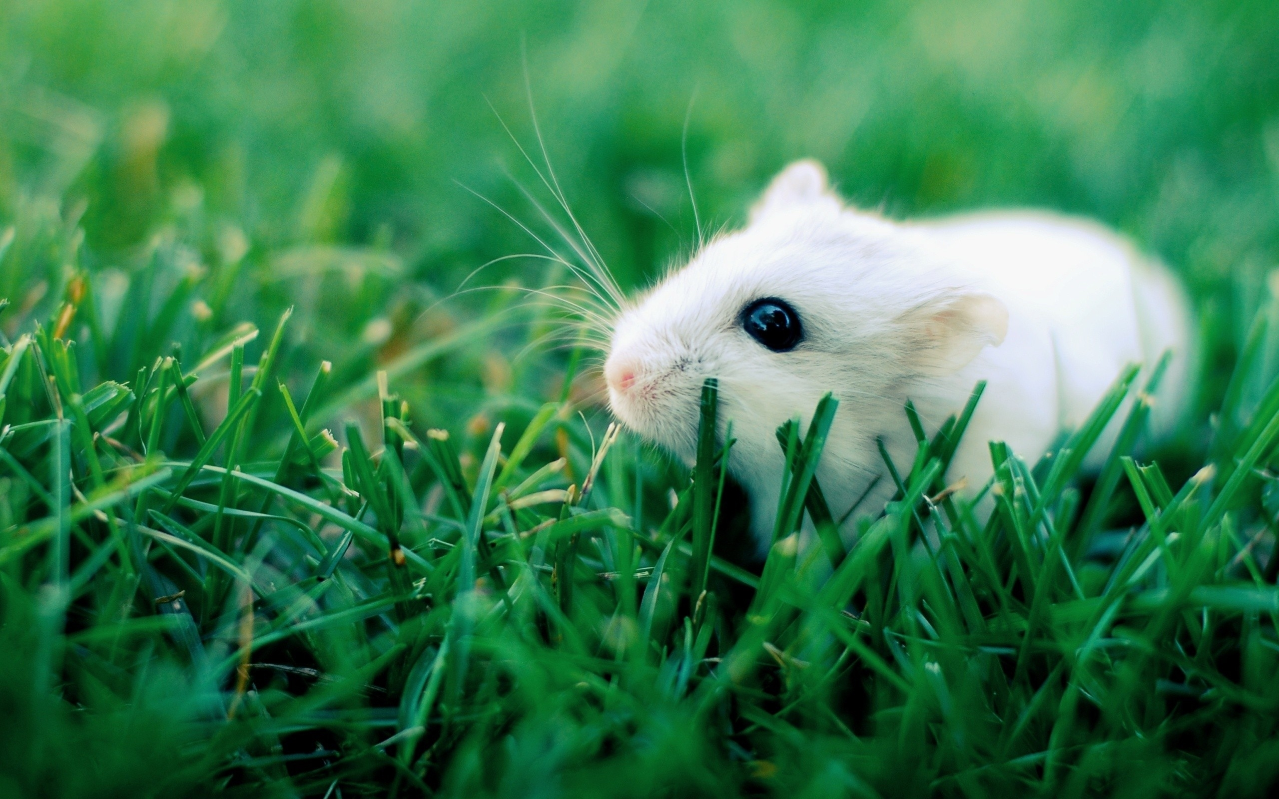 hamster background