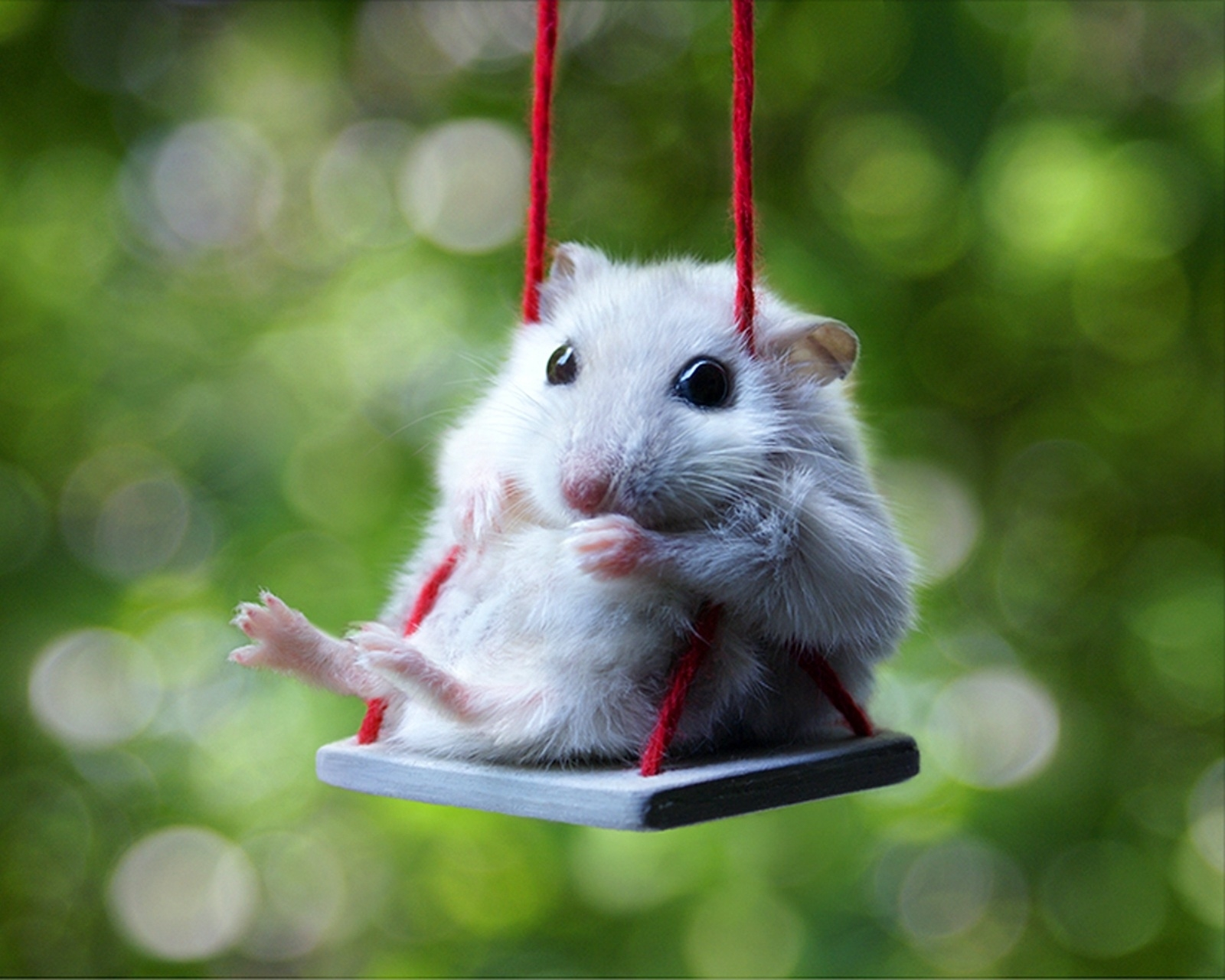 hamster hd background