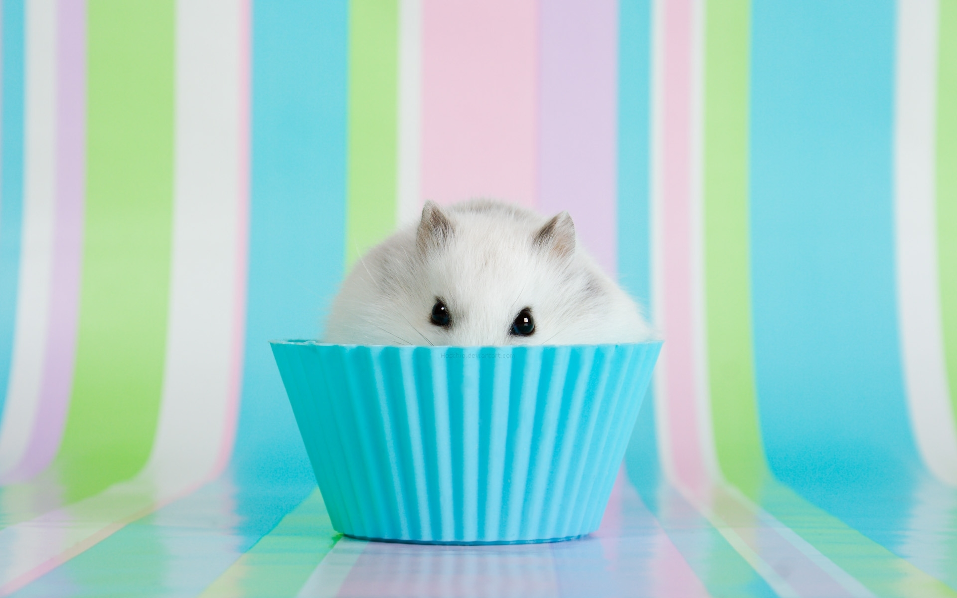 hamster hd pics