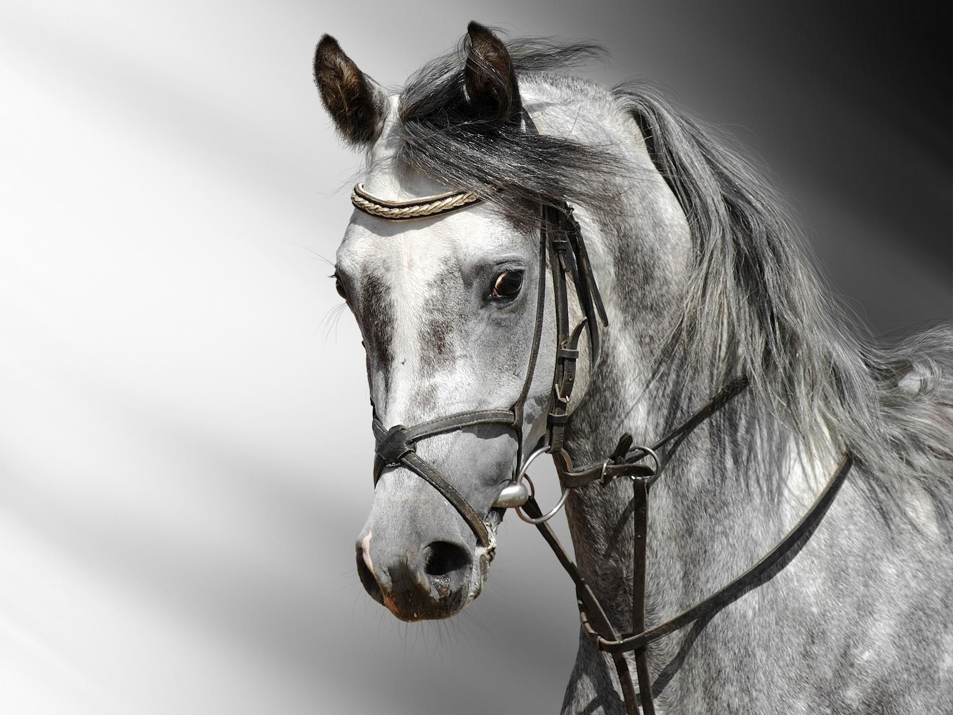 horse 1080