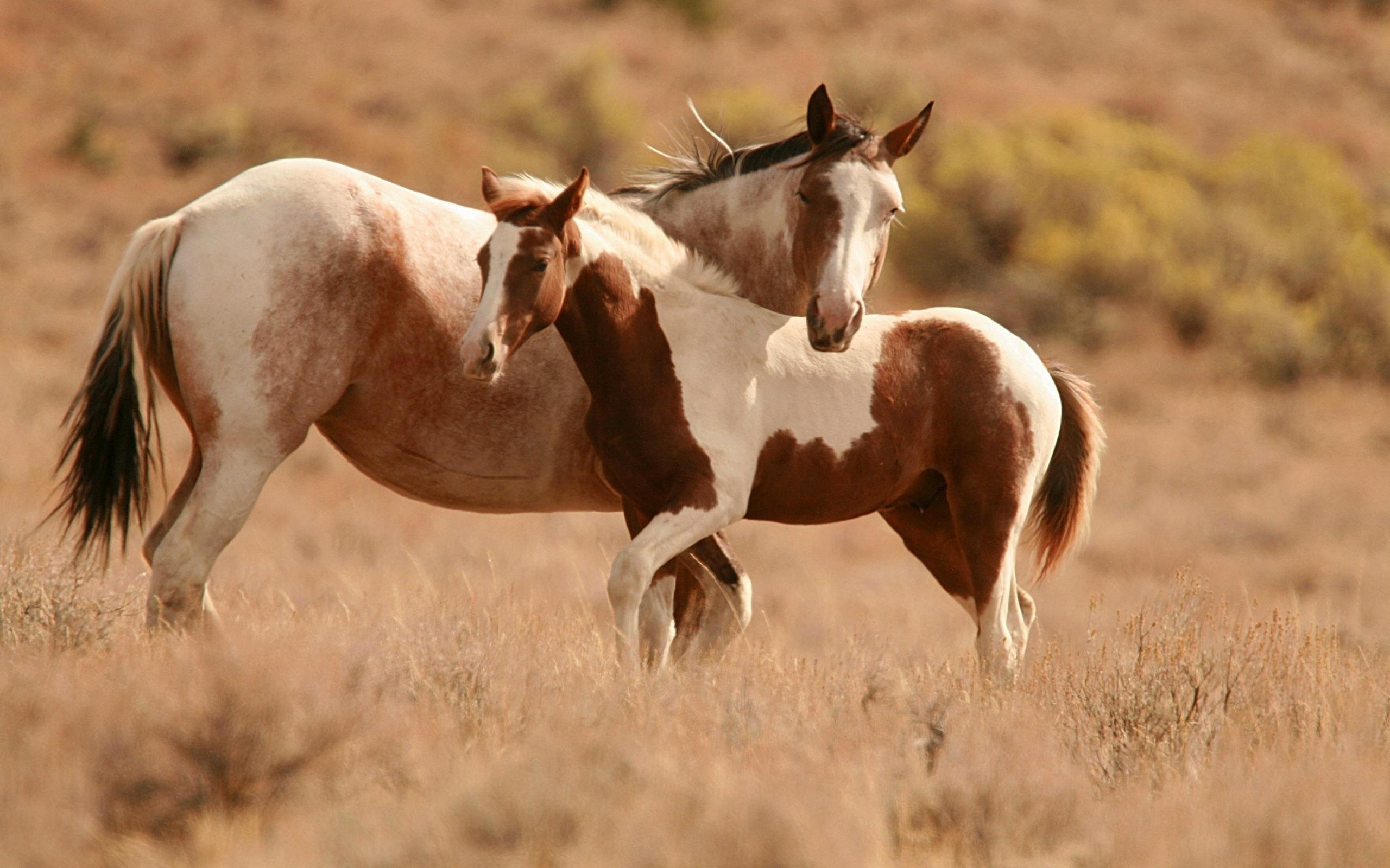 horse deskto