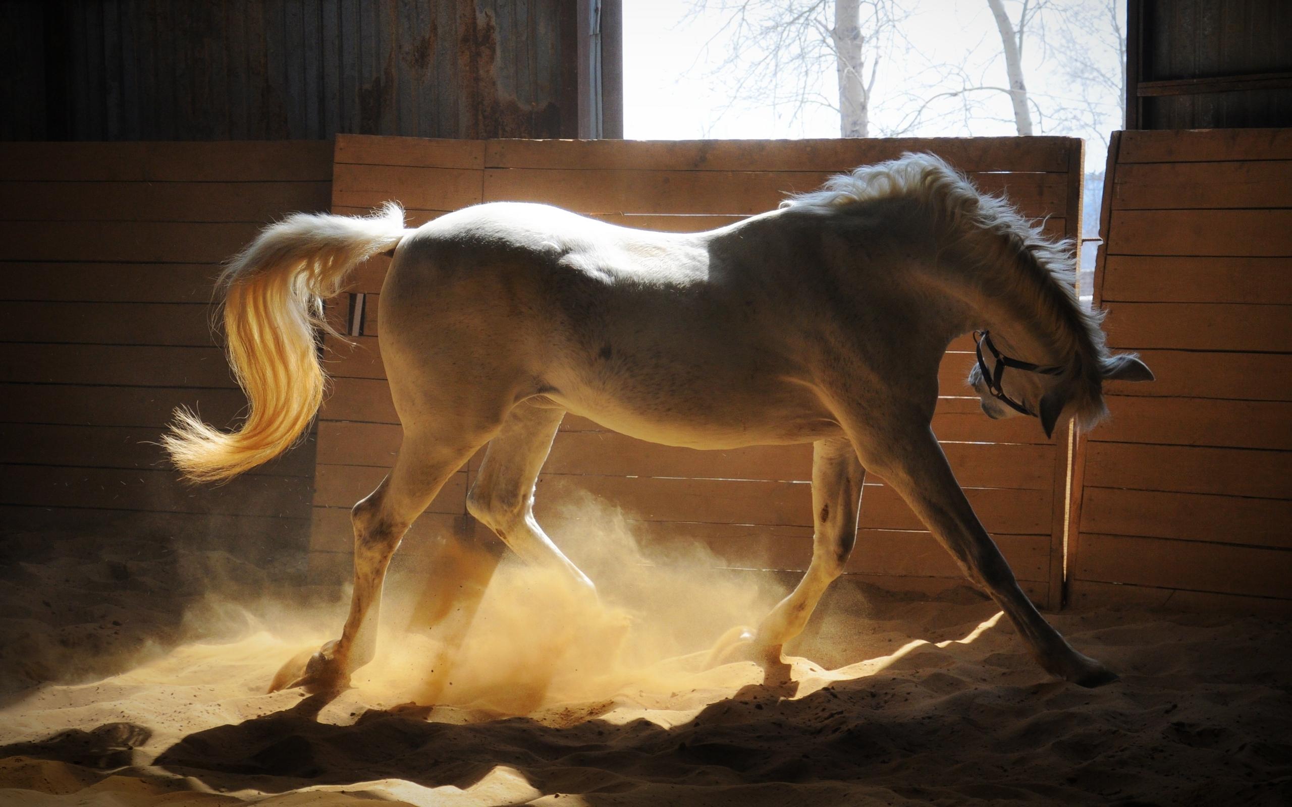 horse full hd