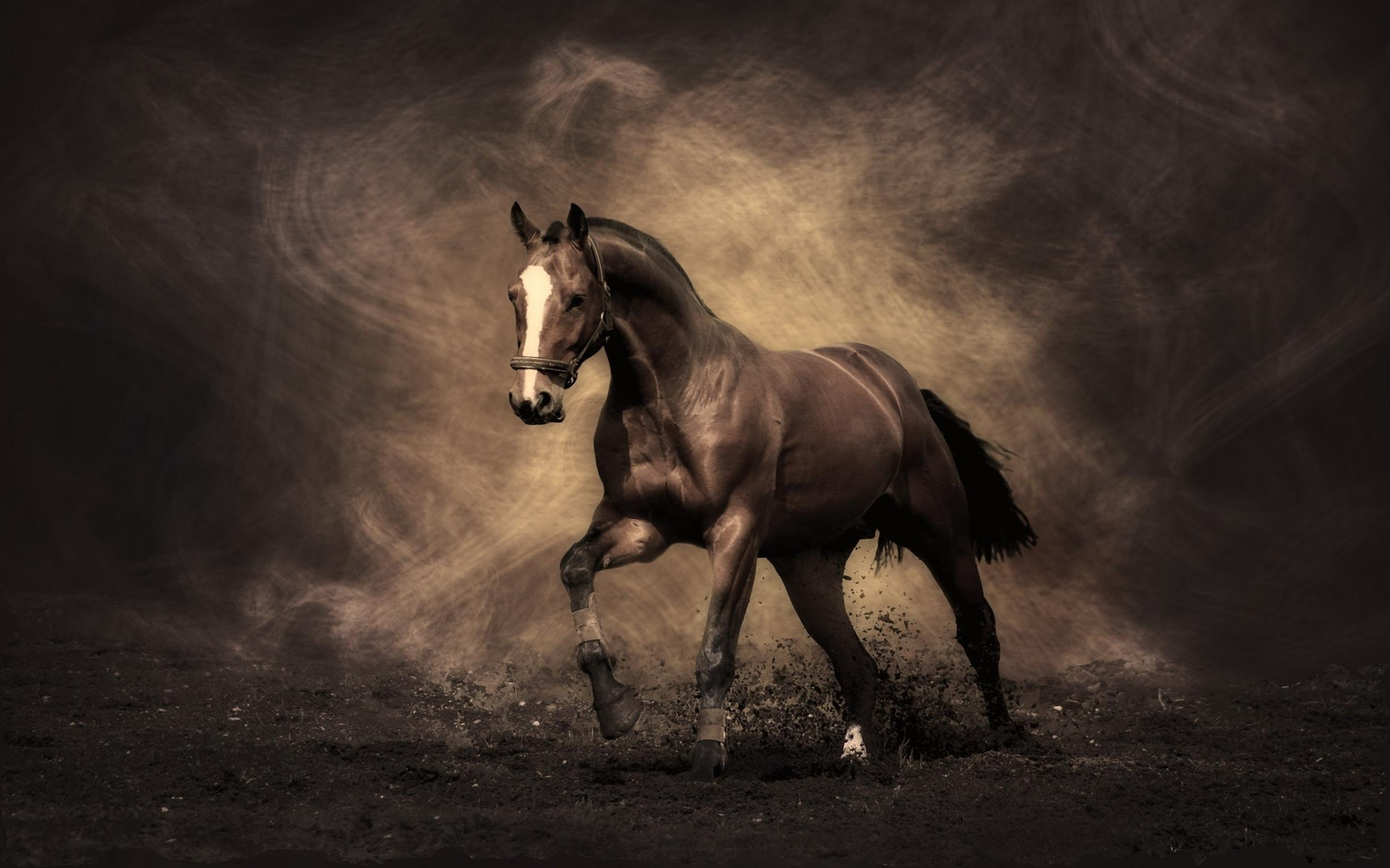 horse hd deskto