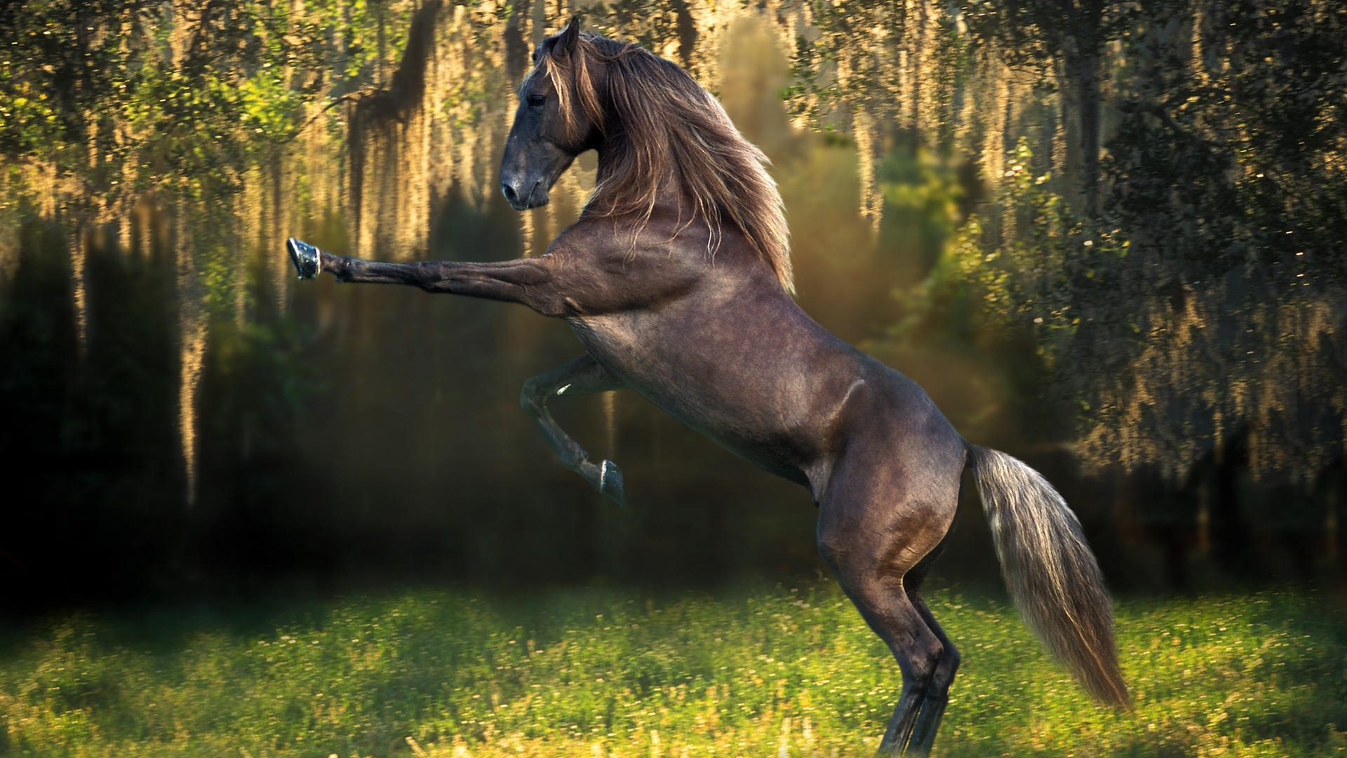 Horse hd photos related wallpapers horse hd pics altavistaventures Image collections