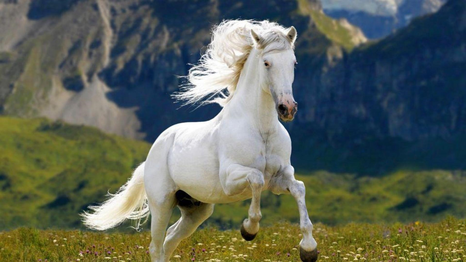 horse high definition wallpapers