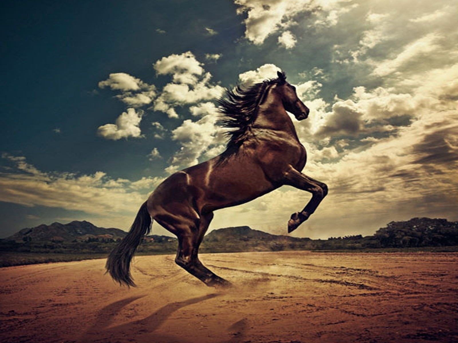 horse images