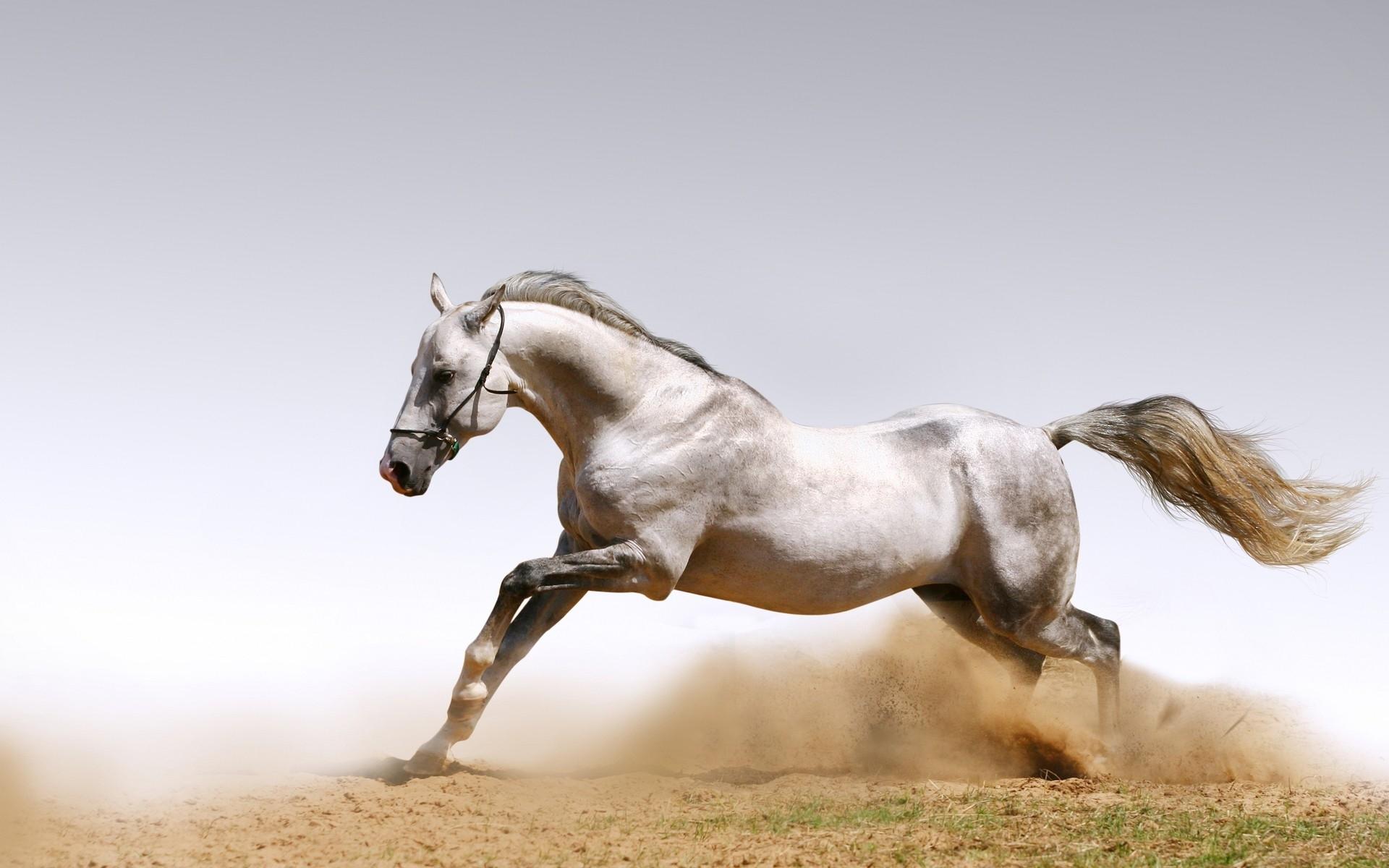 horse mobile wallppaers
