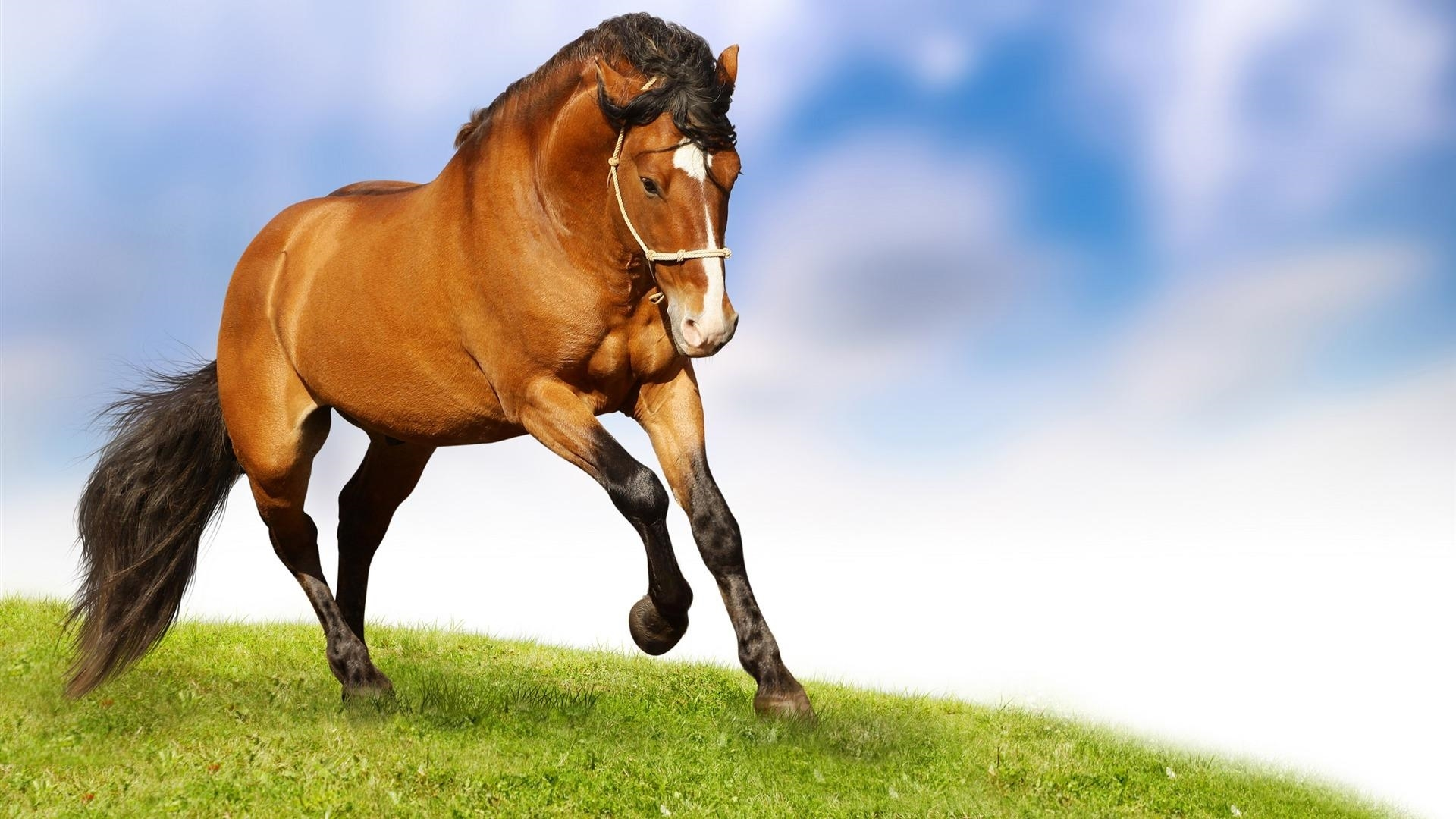 horse new wallpapers