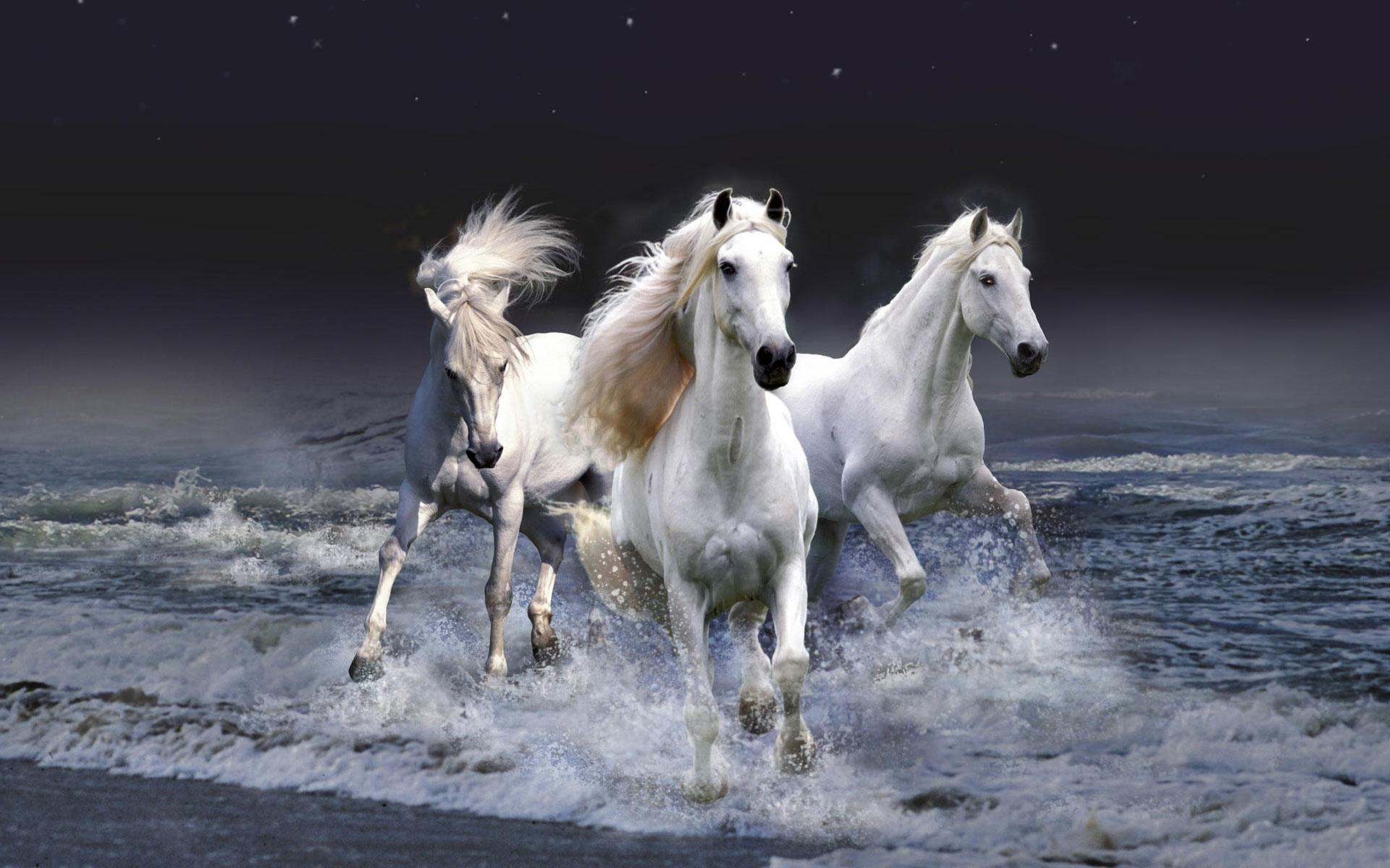 horse pics
