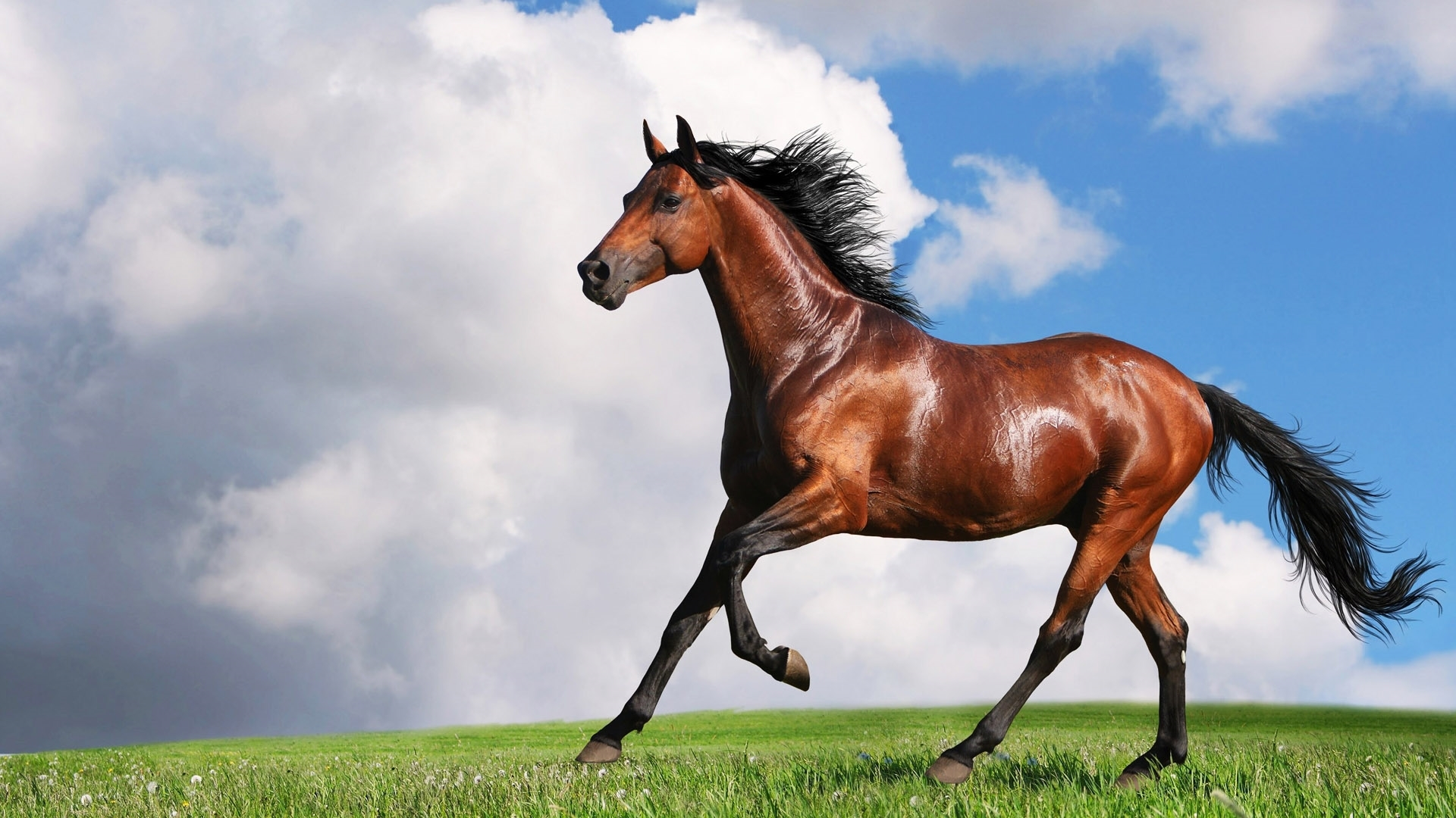 horse wallpapers for android