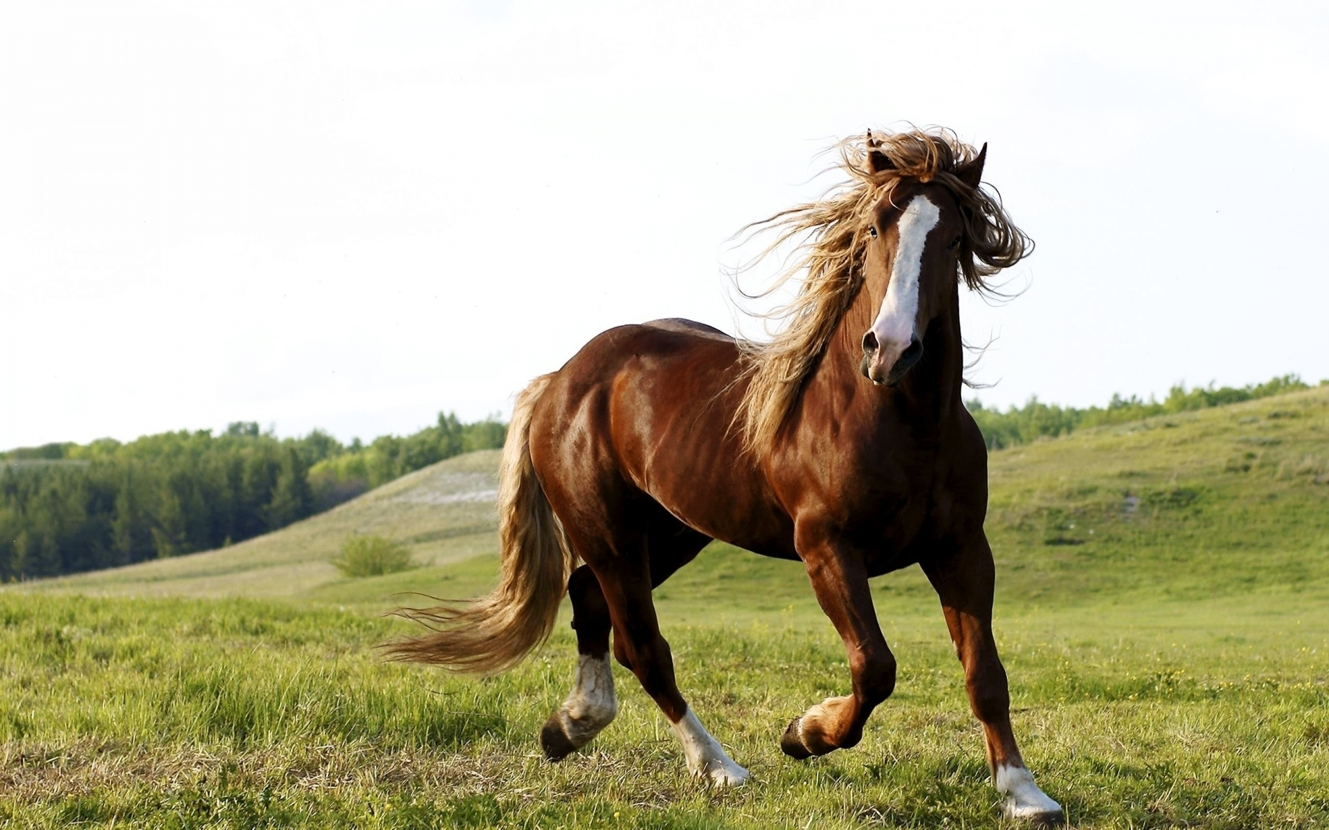 Horse Wallpapers For Iphone