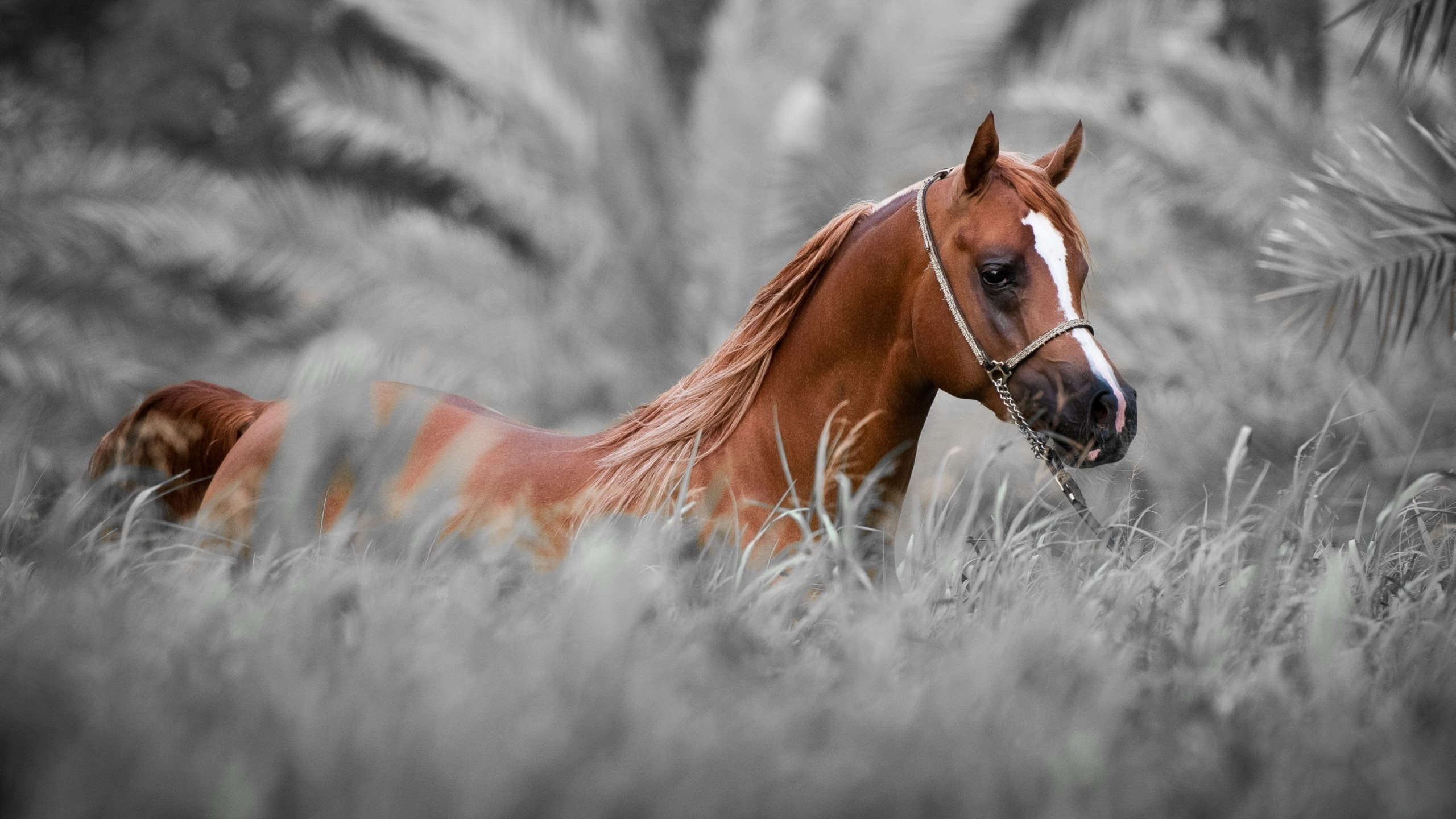 Horse wallpapers hd - Free horse backgrounds ...