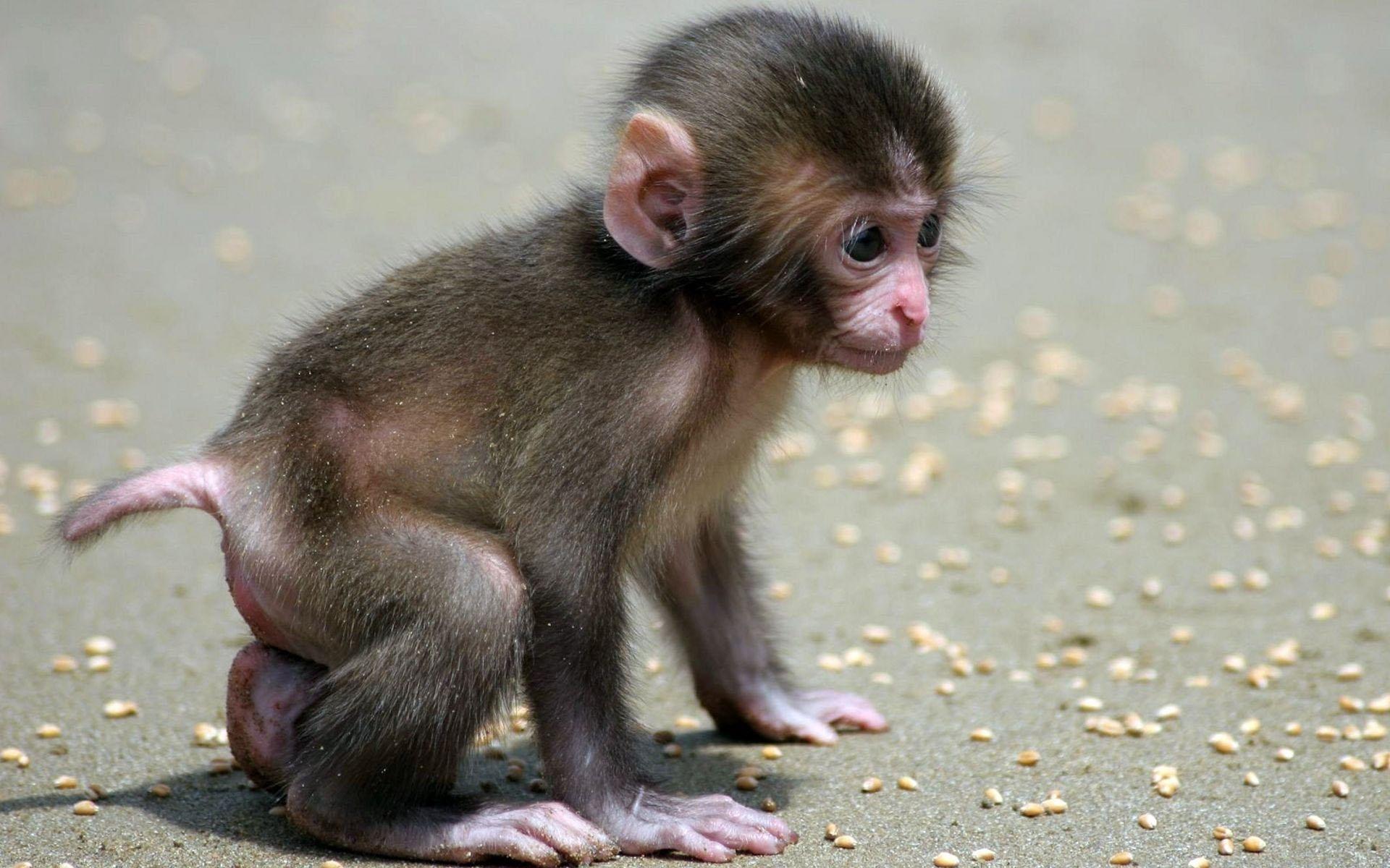monkey 1080p wide