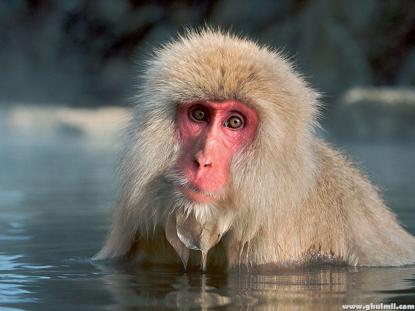 monkey 1080