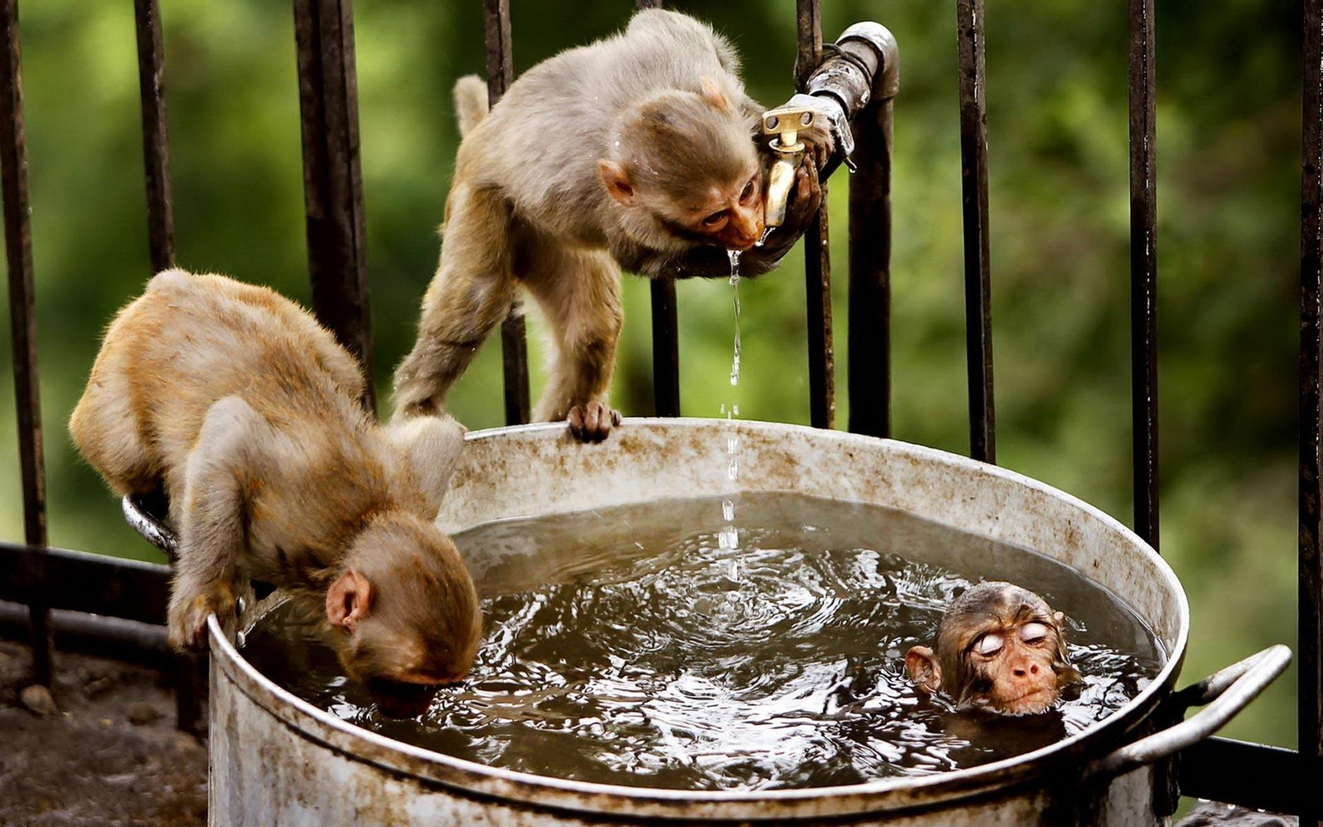 monkey download wallpaper