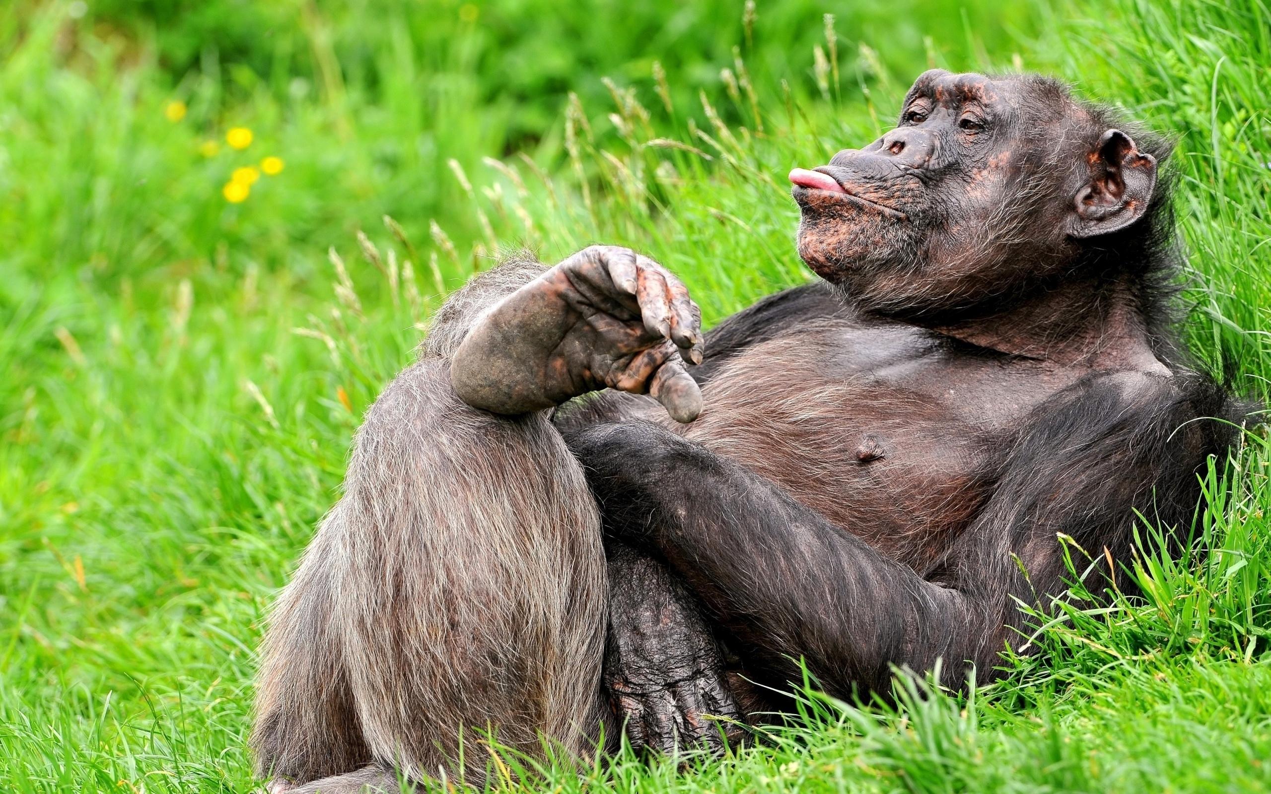 monkey free