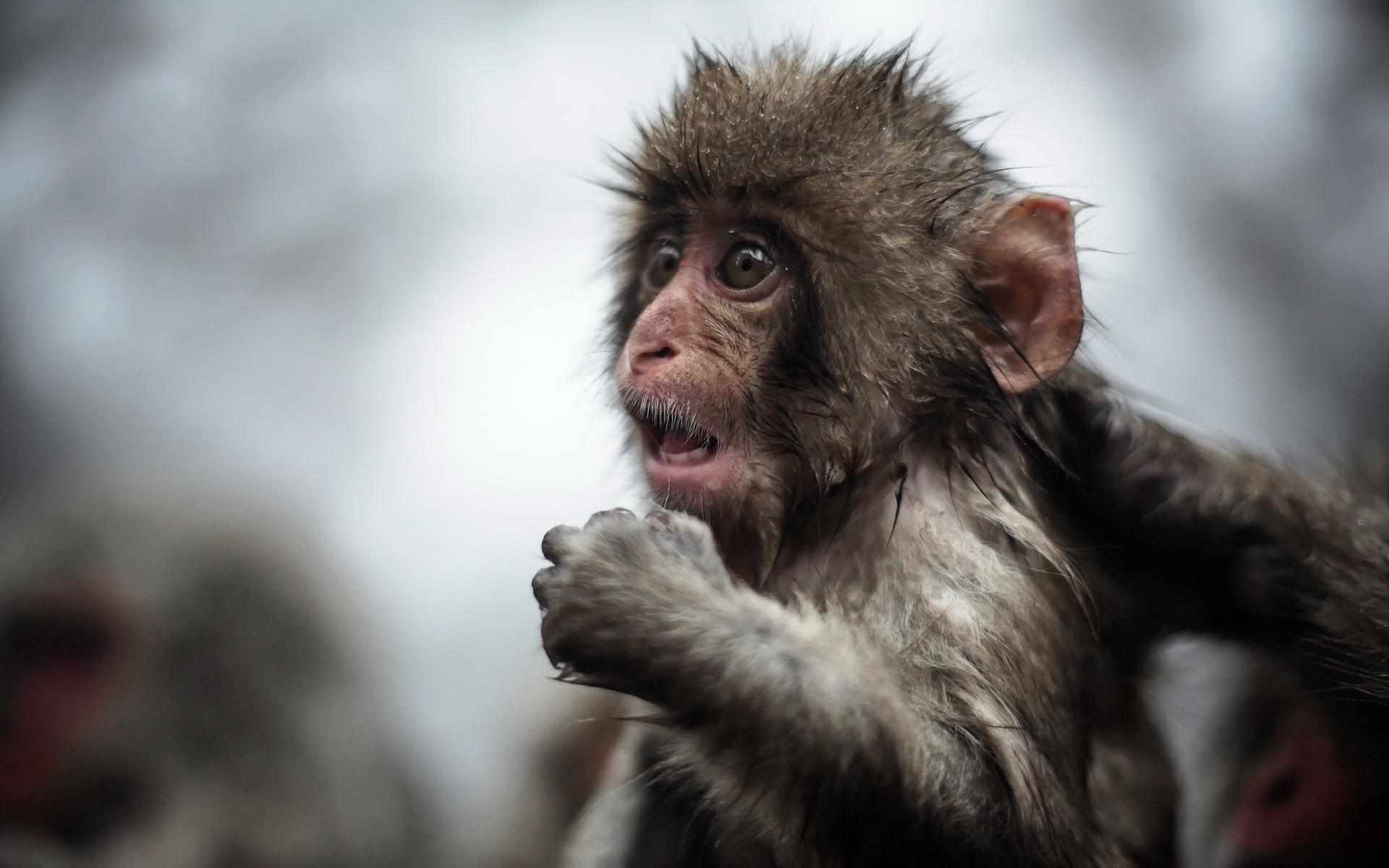 monkey hd photos