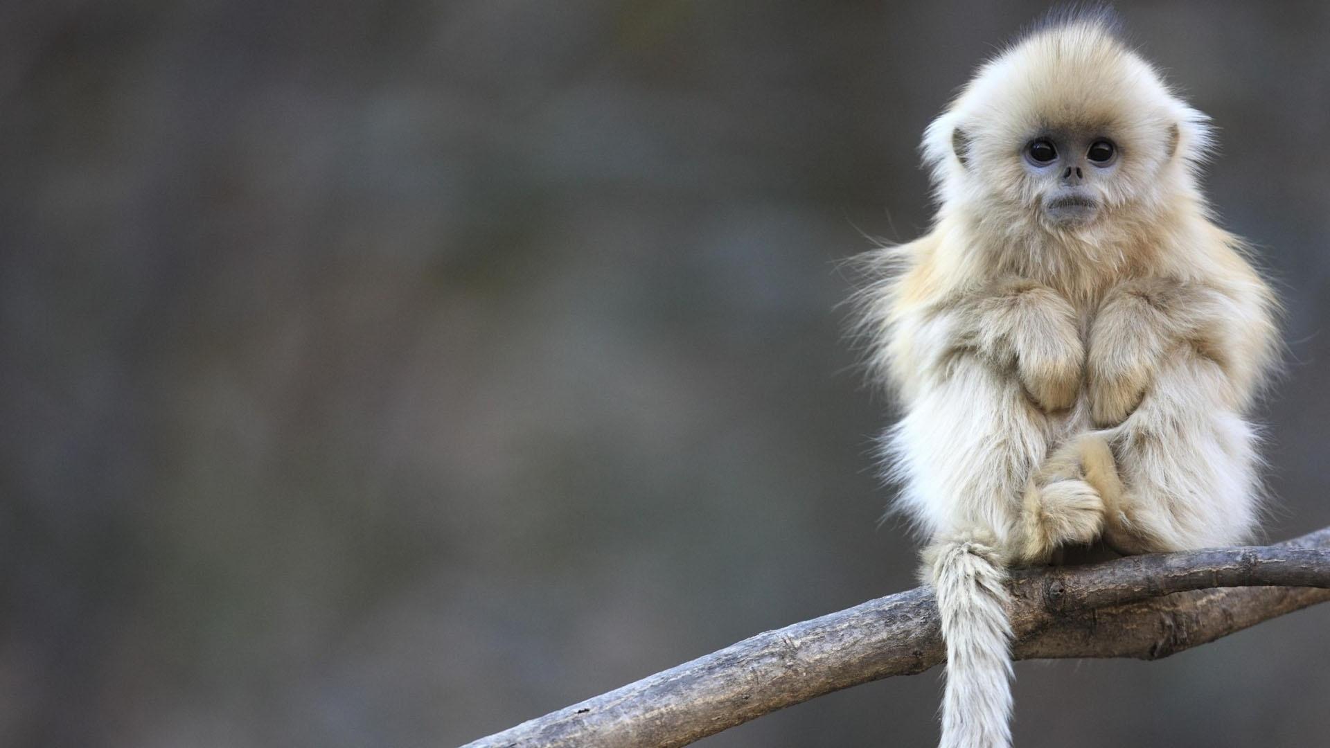 monkey new photos