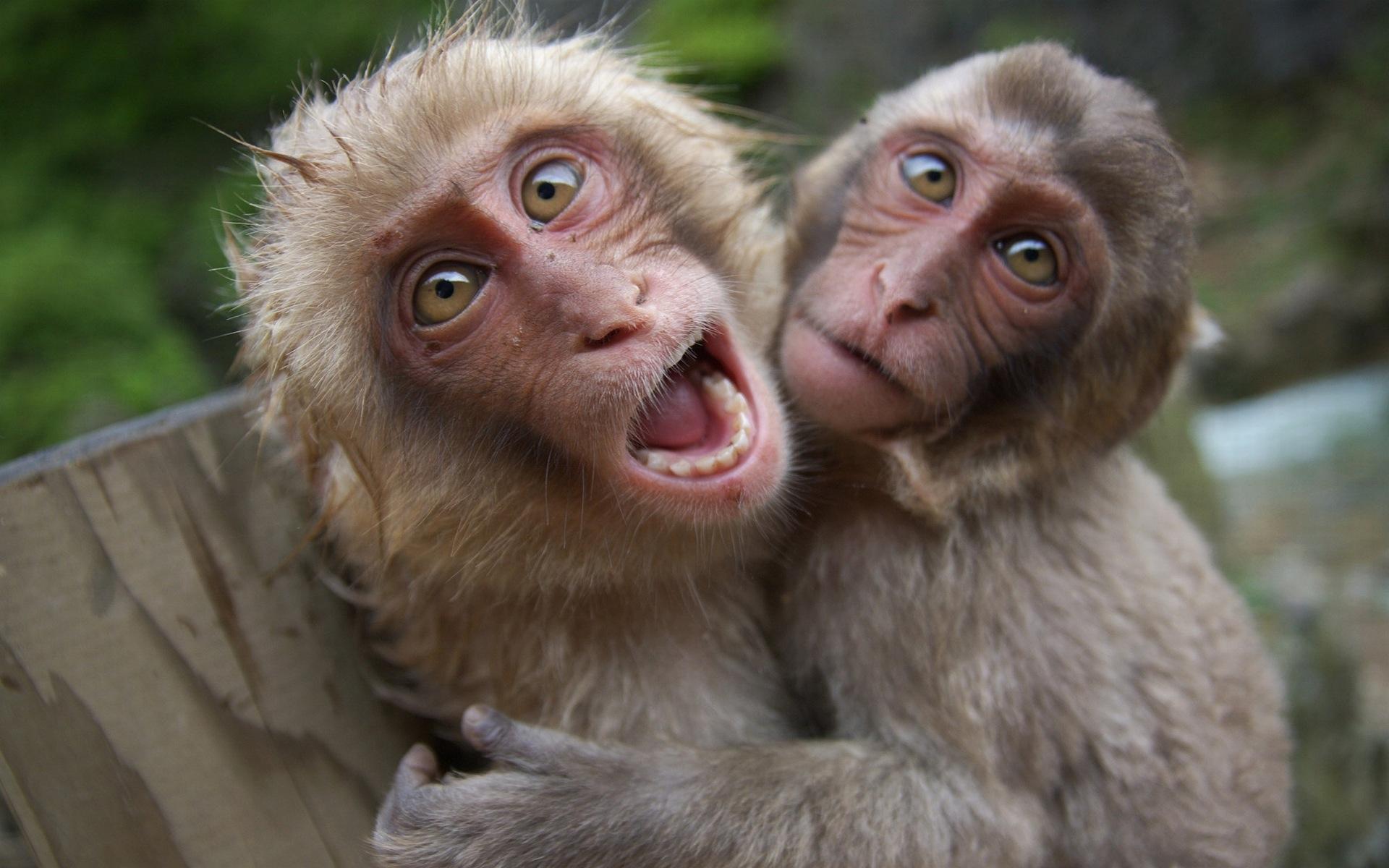 monkey pics