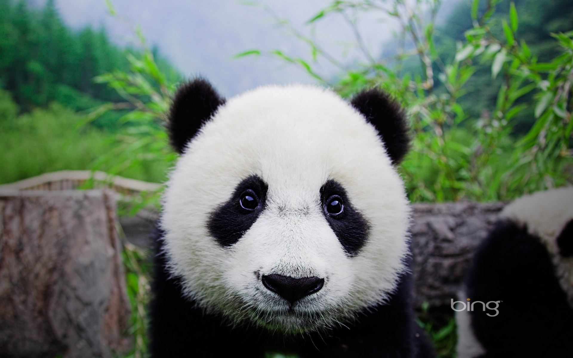 panda 1080